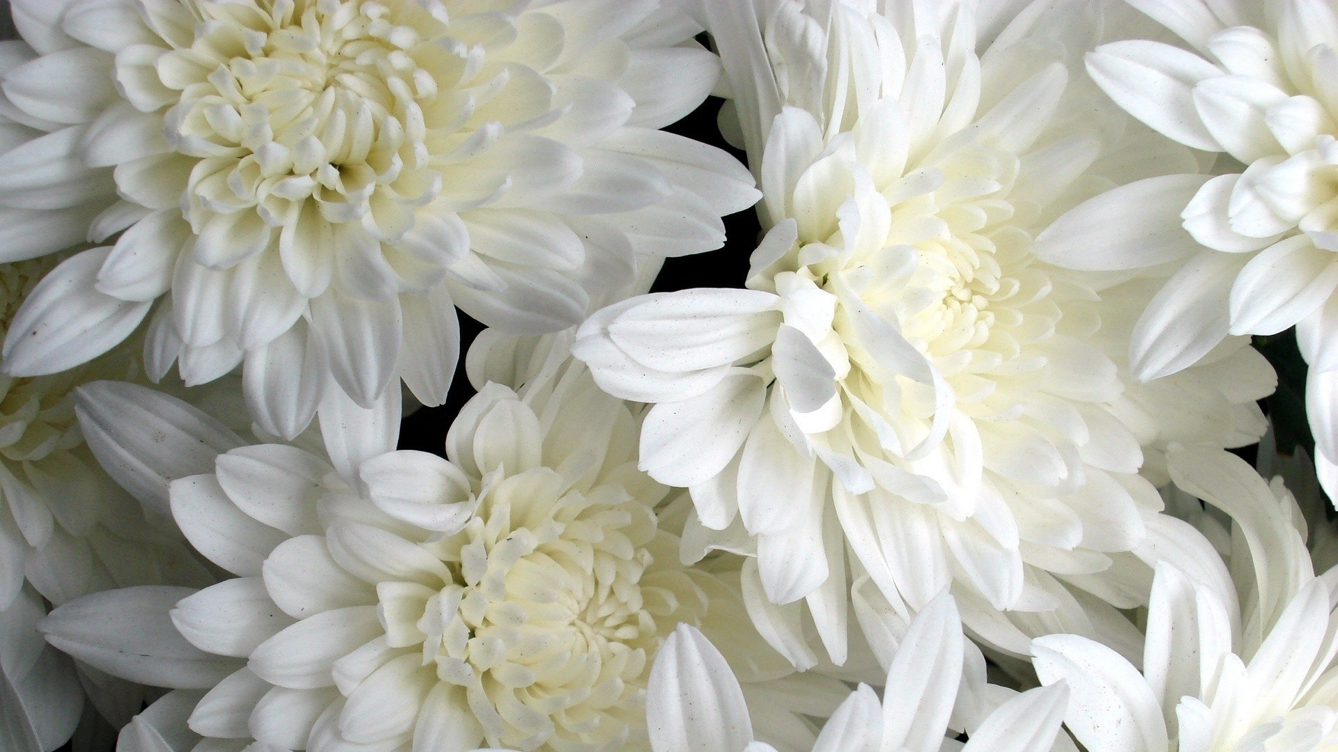 White Flower Picture