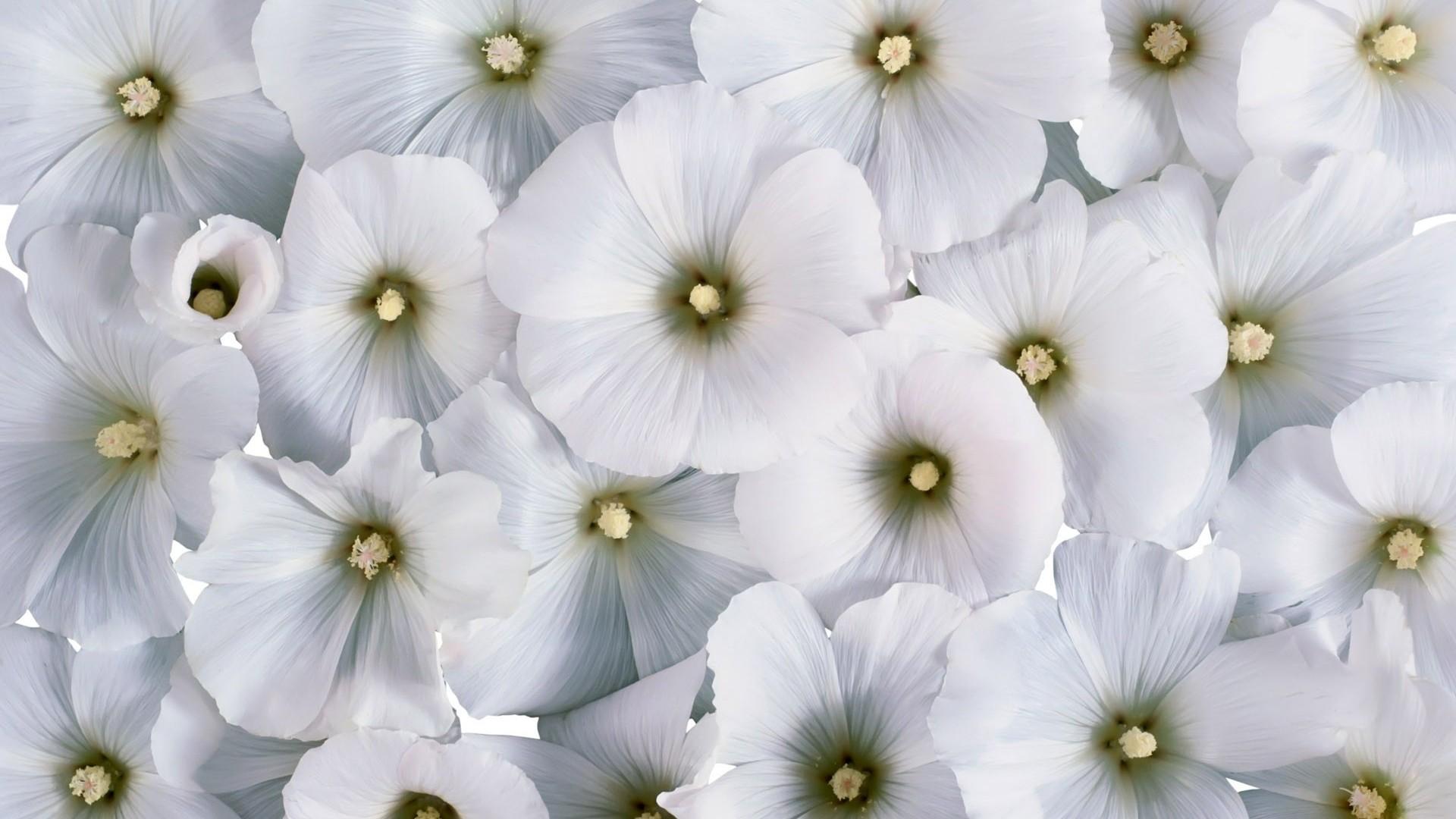 White Flower Pic