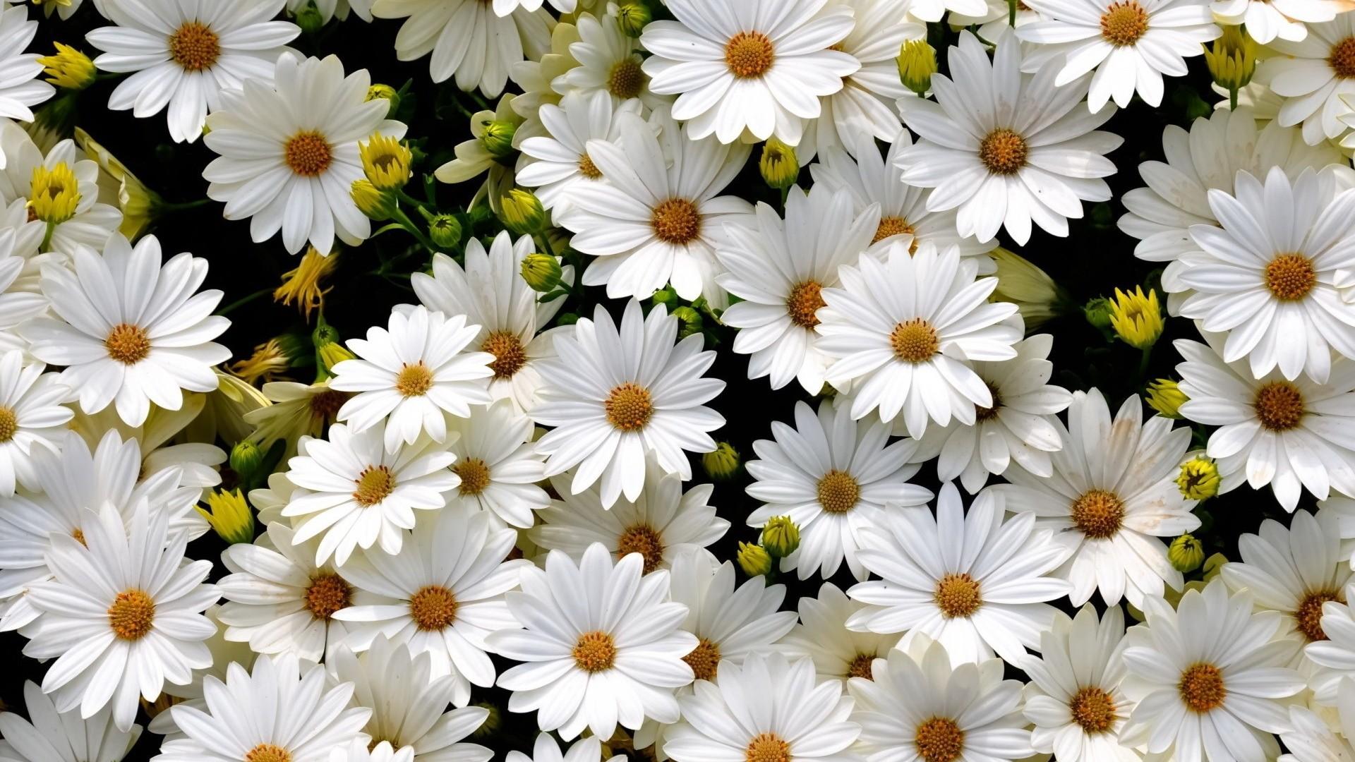 White Flower wallpaper photo hd