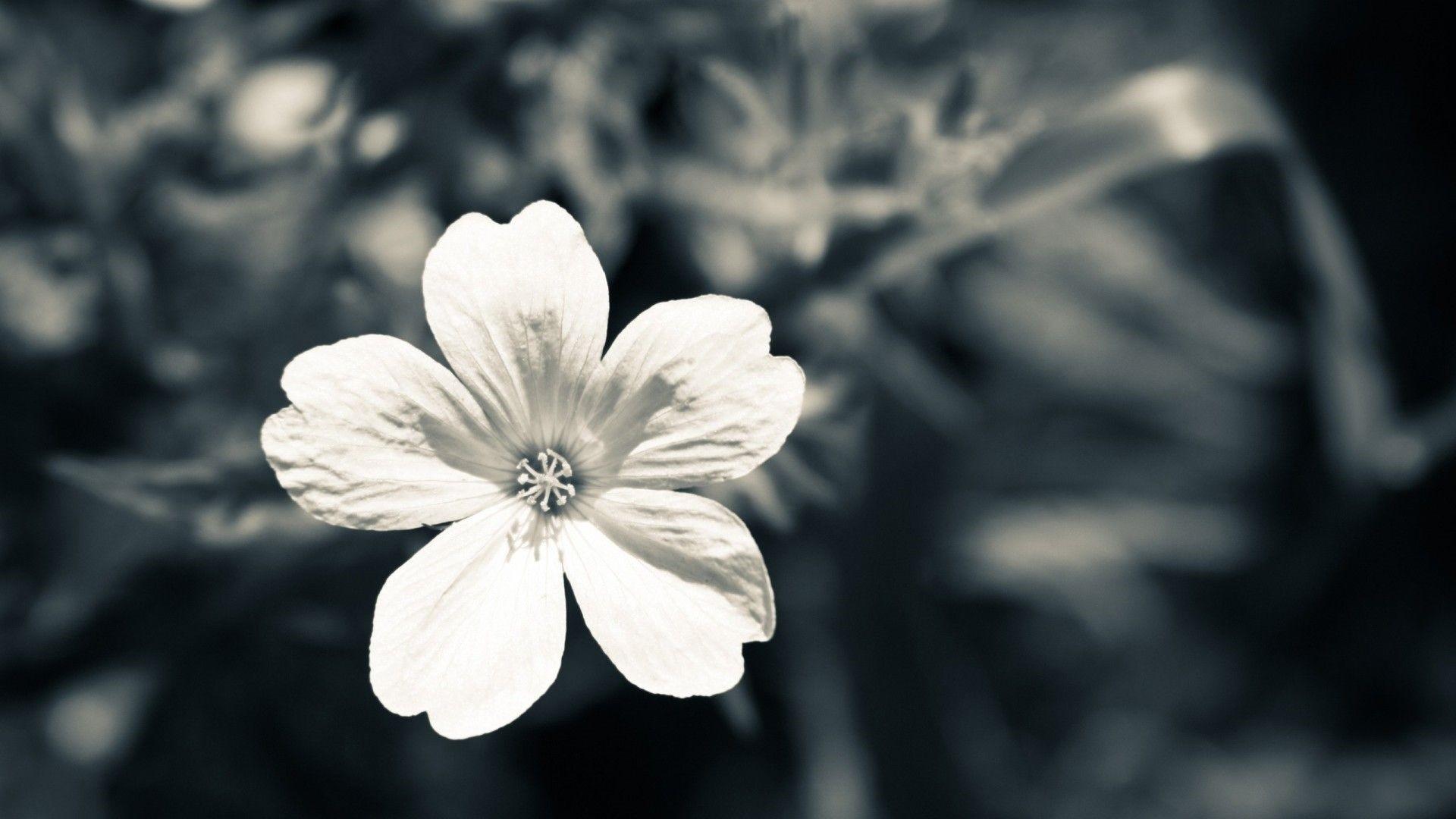 White Flower Wallpaper image hd