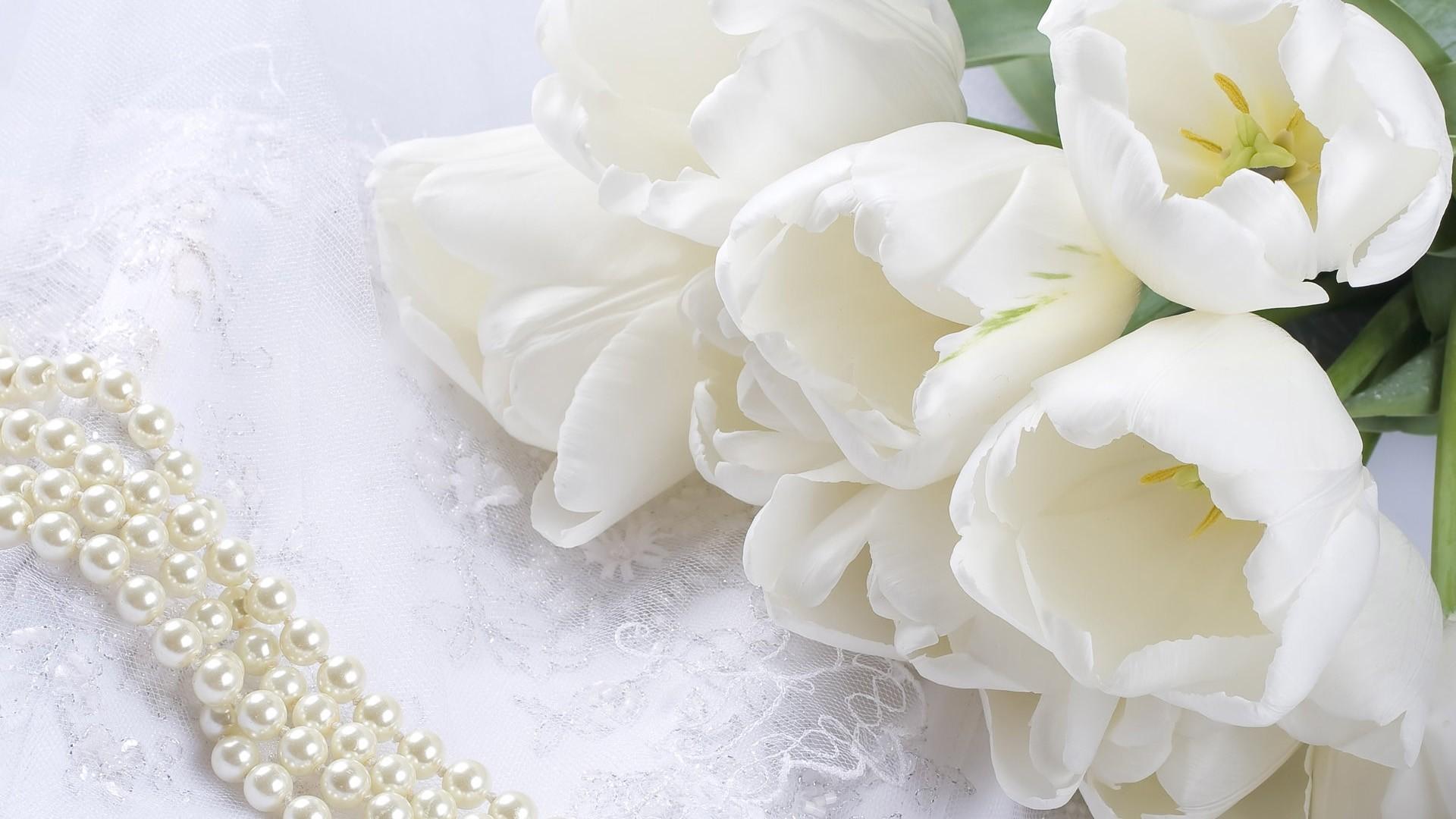 White Flower Background Wallpaper