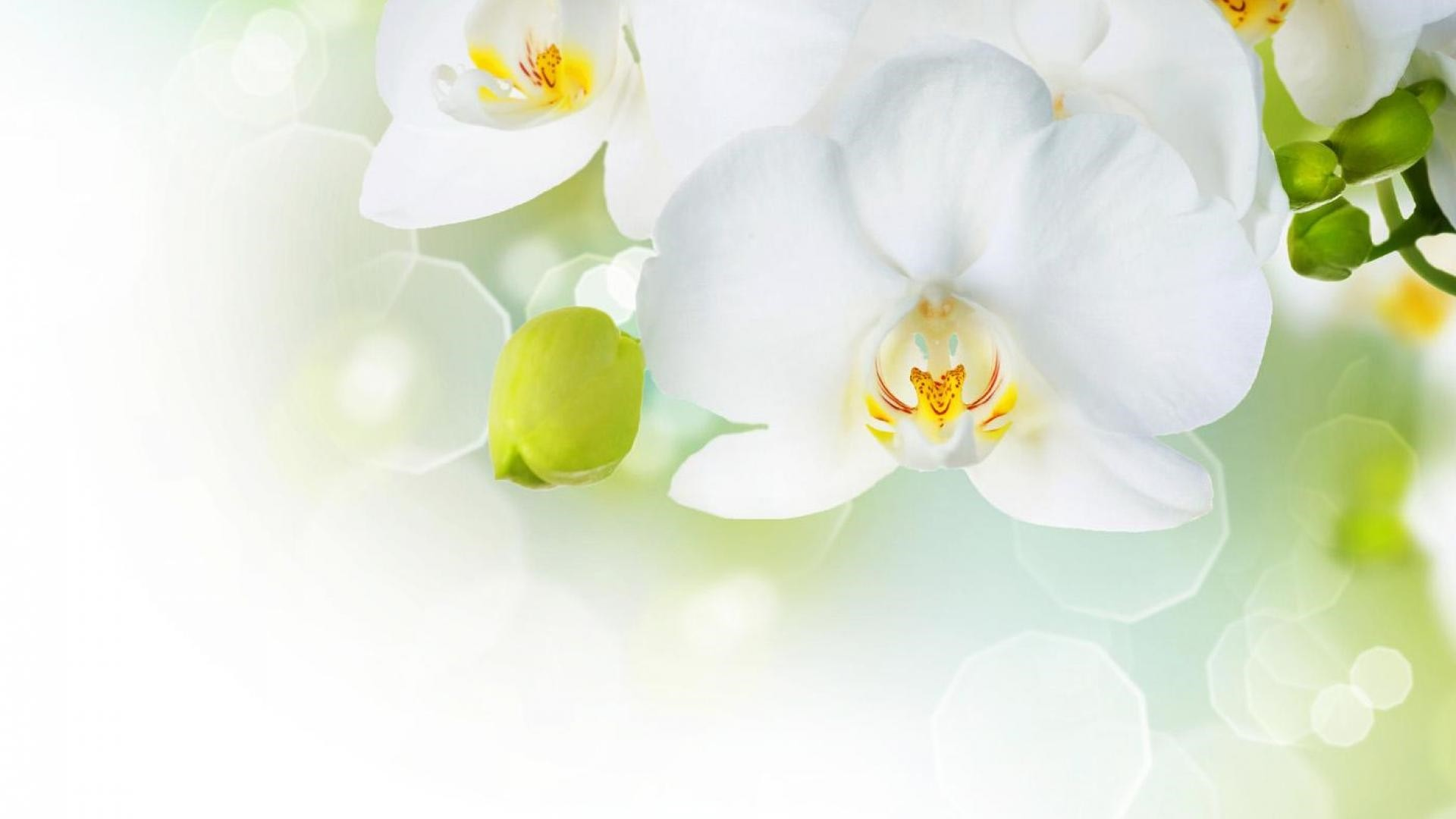 White Flower hd wallpaper download