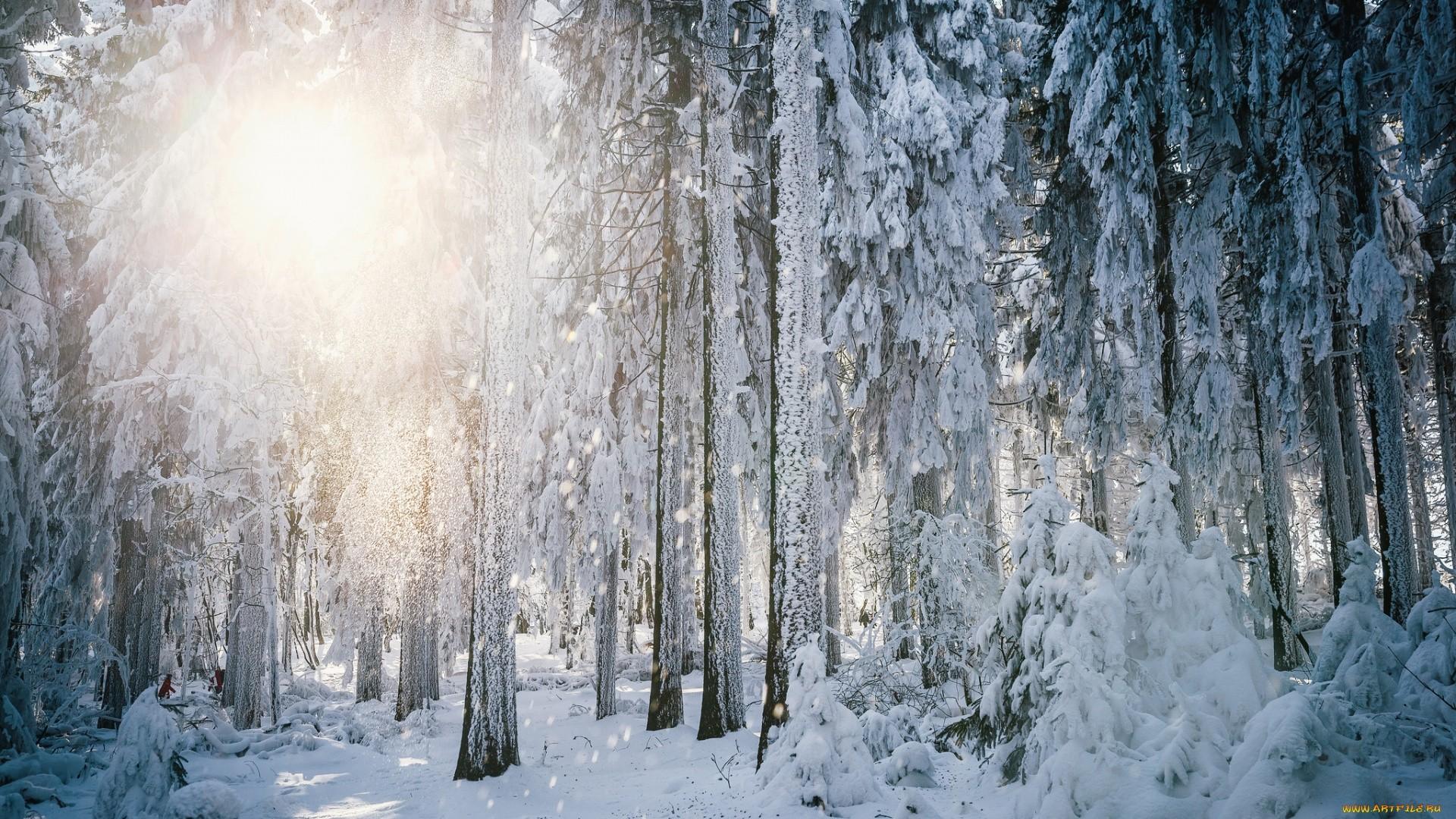 Winter Wonderland HD Wallpaper