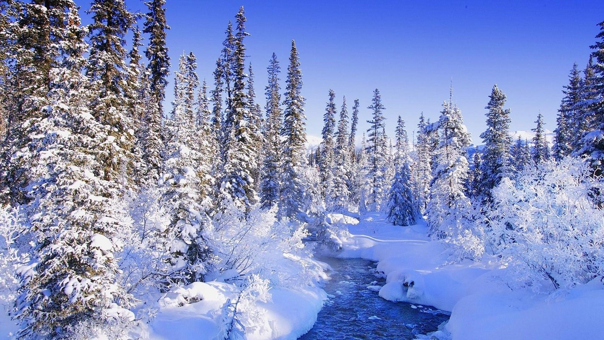 Winter Wonderland Wallpaper for pc
