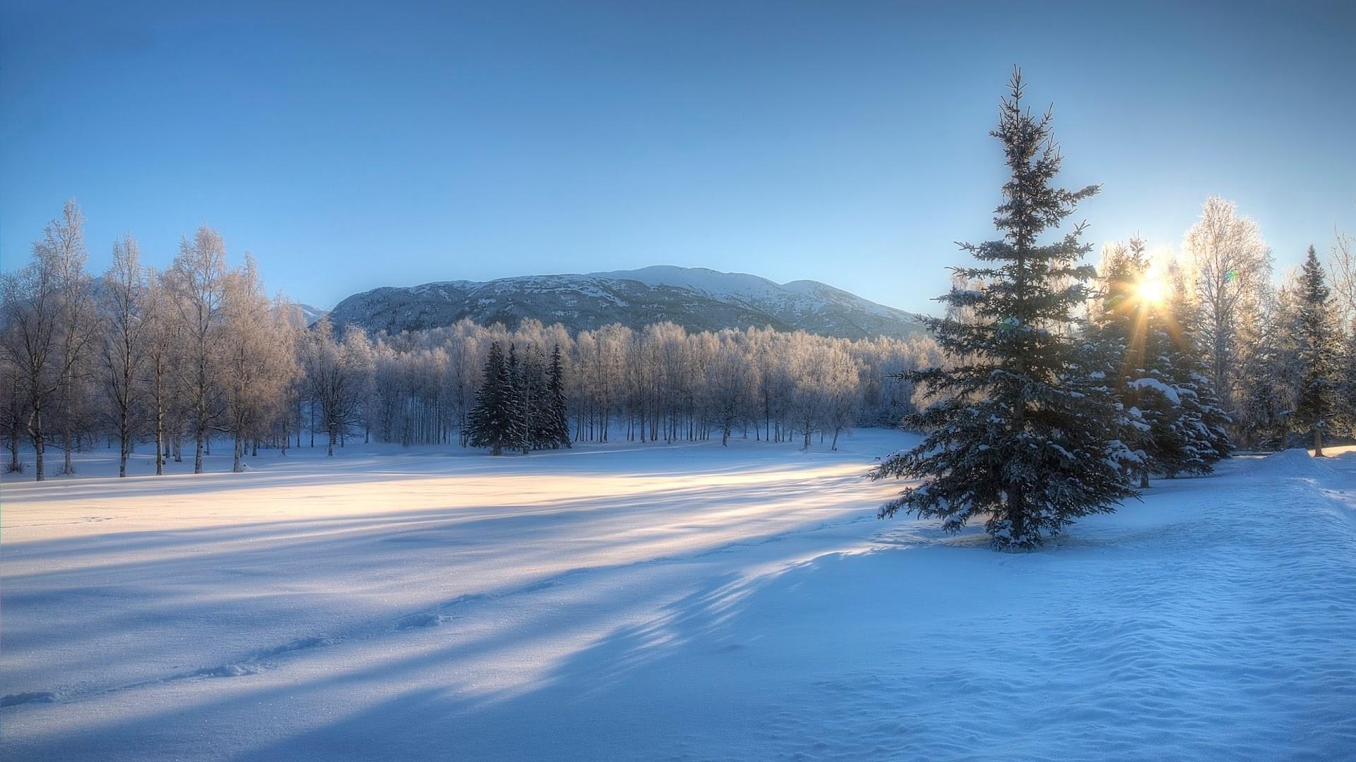Winter Wonderland Wallpaper and Background