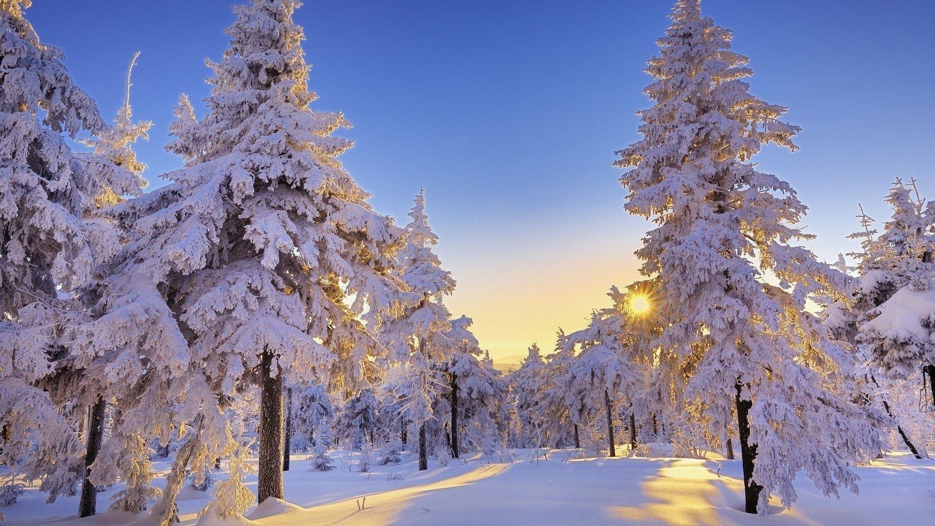 Winter Wonderland High Quality