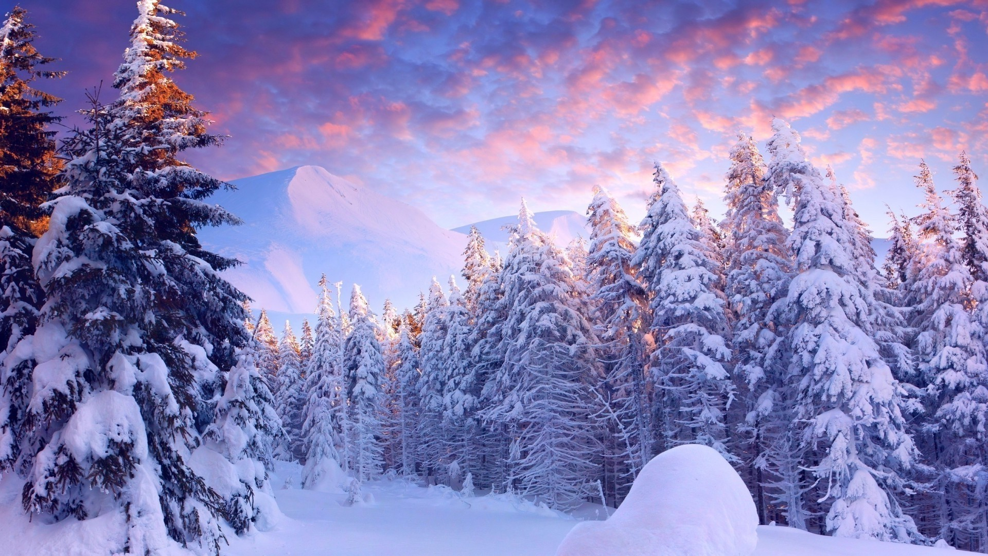 Winter Wonderland Wallpaper image hd