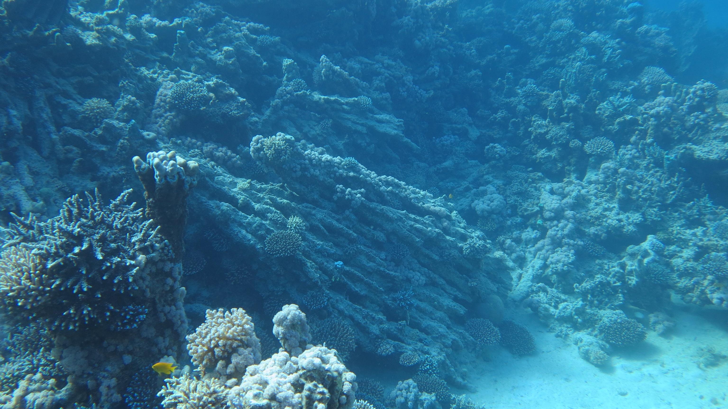 Aquarium Wallpaper and Background
