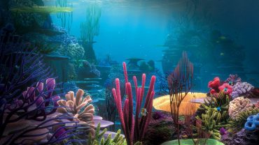 Aquarium wallpaper photo hd