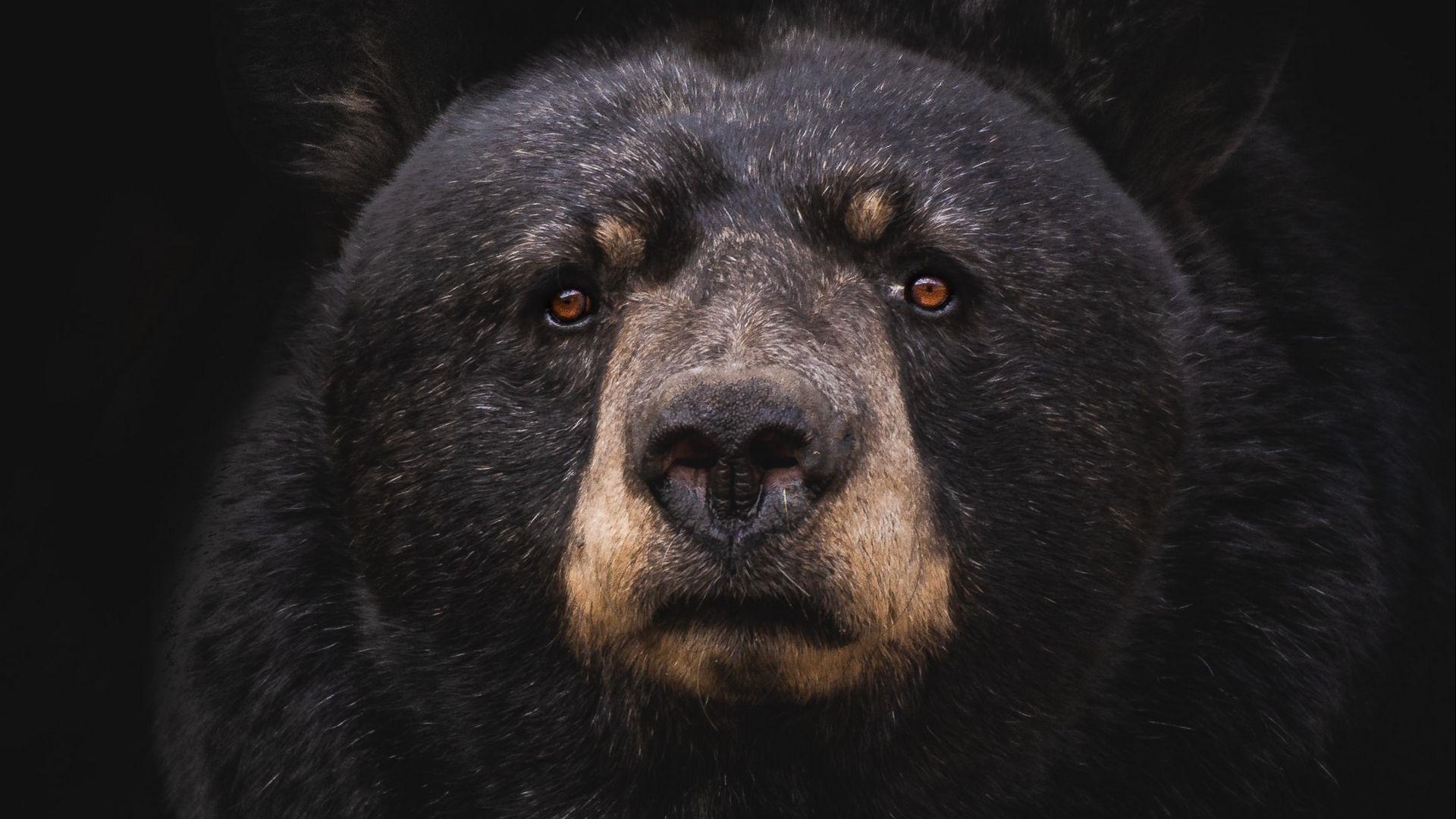 Black Bear Pic