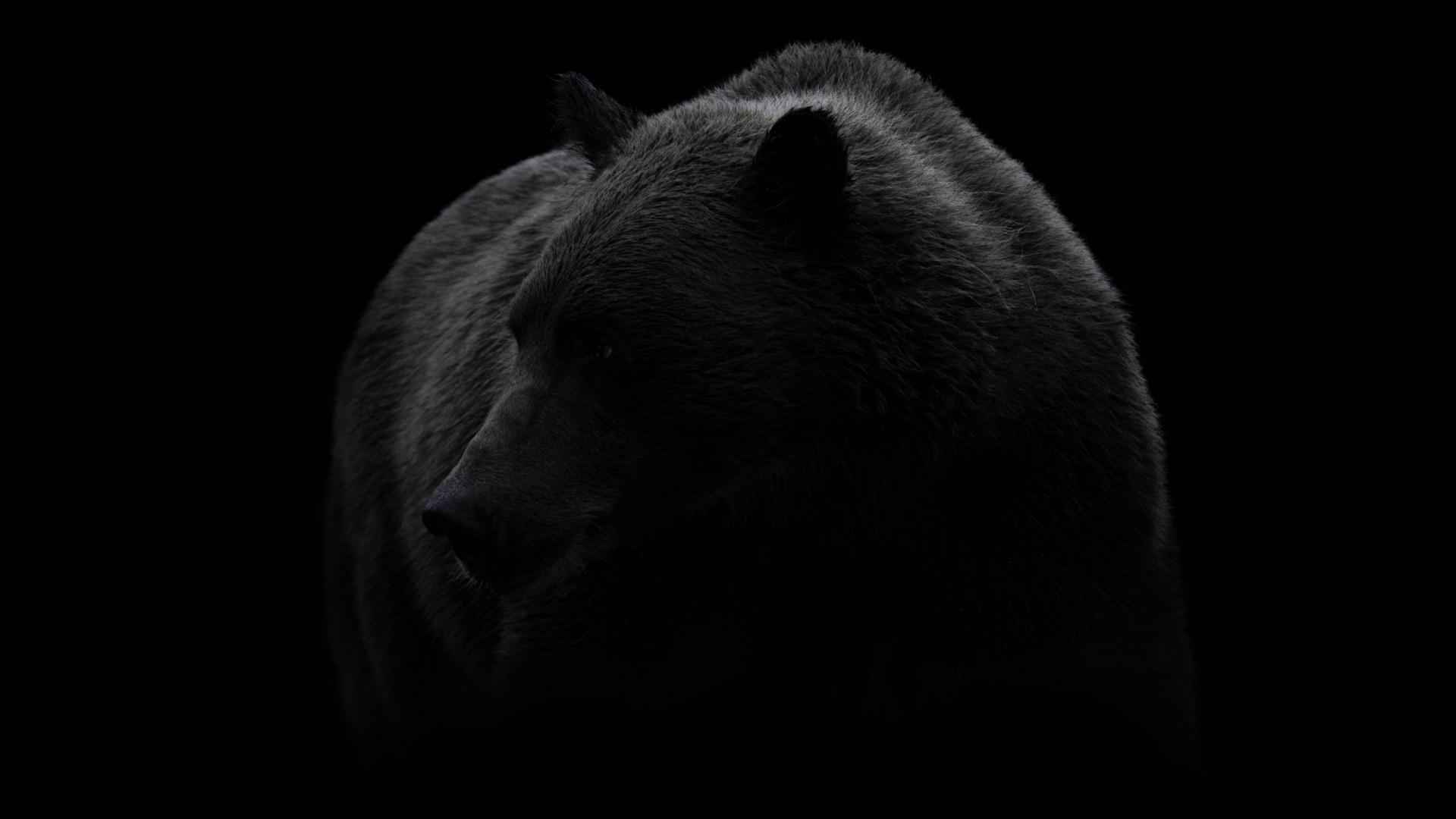Black Bear HD Download
