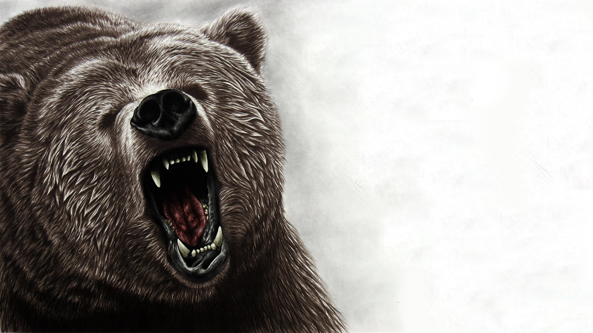 Black Bear Background