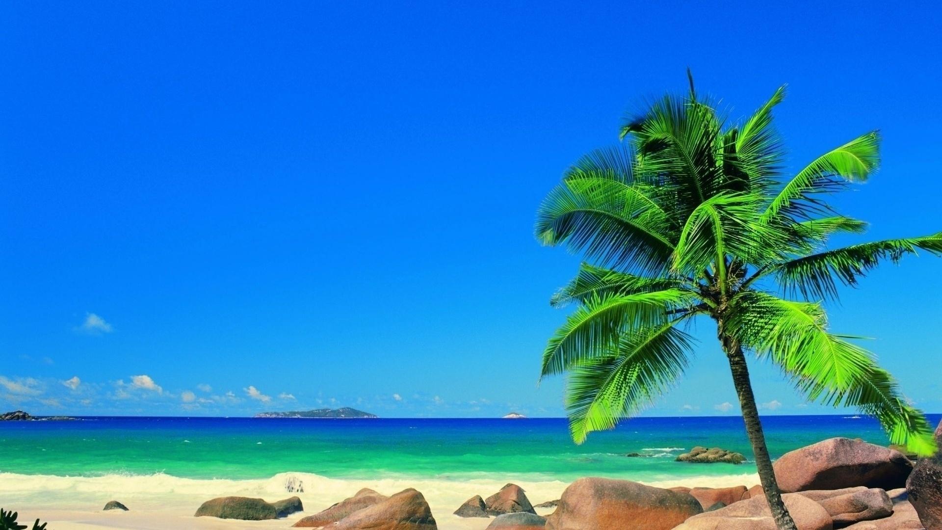 Paradise Background Wallpaper