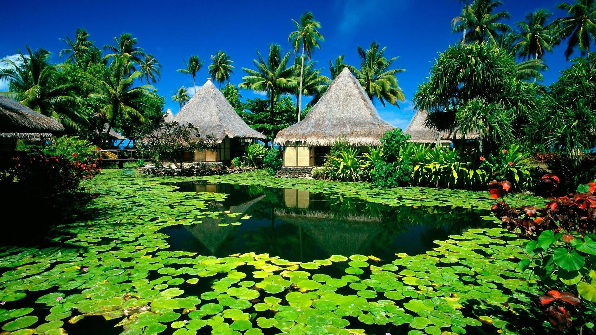 Paradise Pic