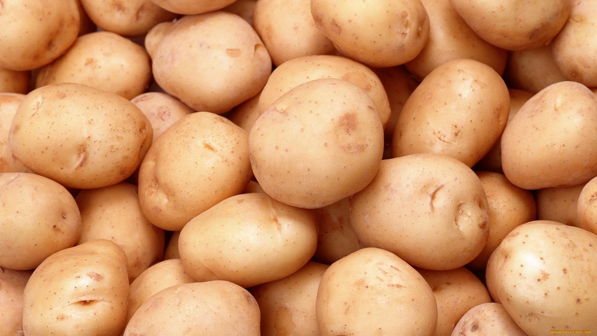 Potatoes Background Wallpaper