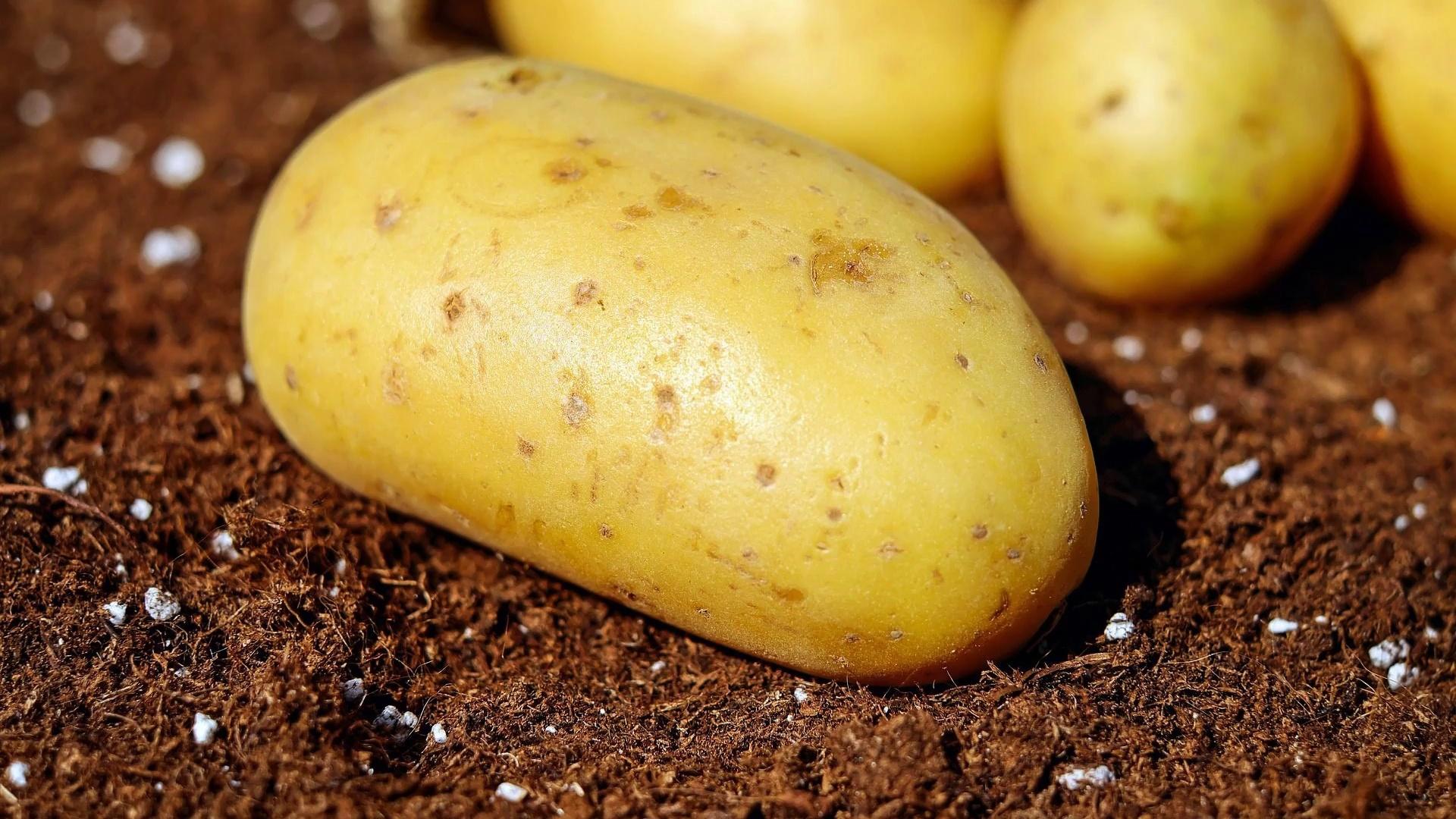 Potatoes Download Wallpaper