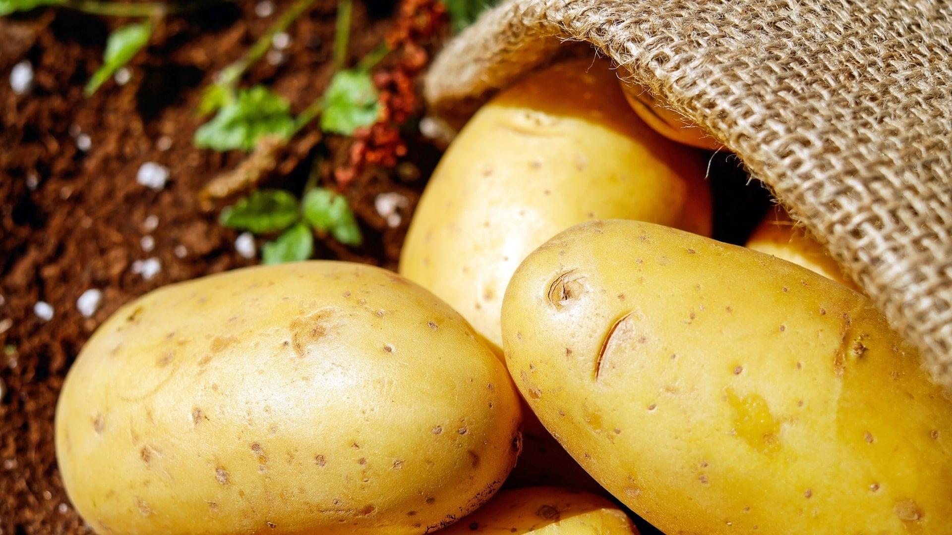 Potatoes computer wallpaper