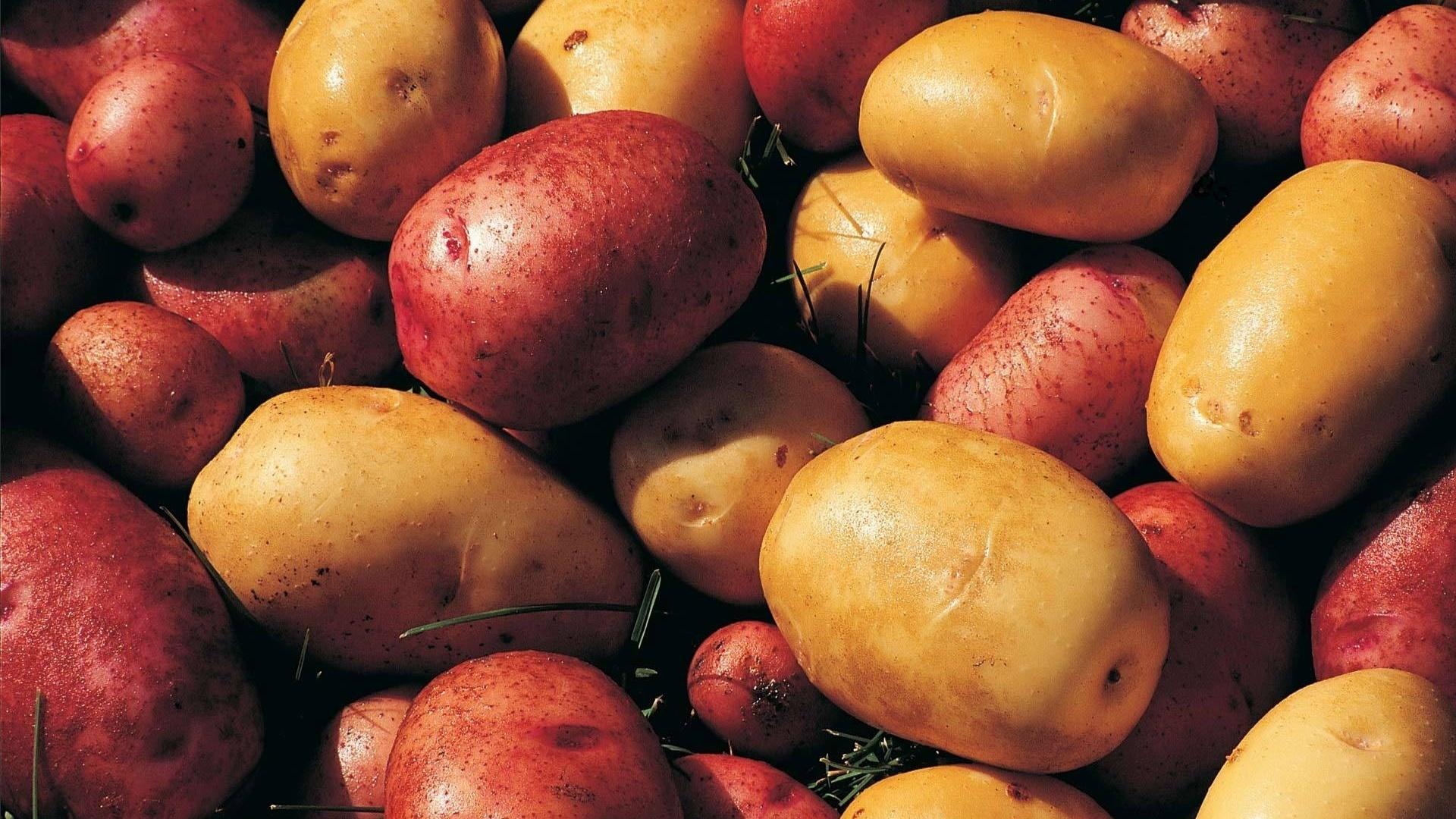 Potatoes Wallpaper Picture hd