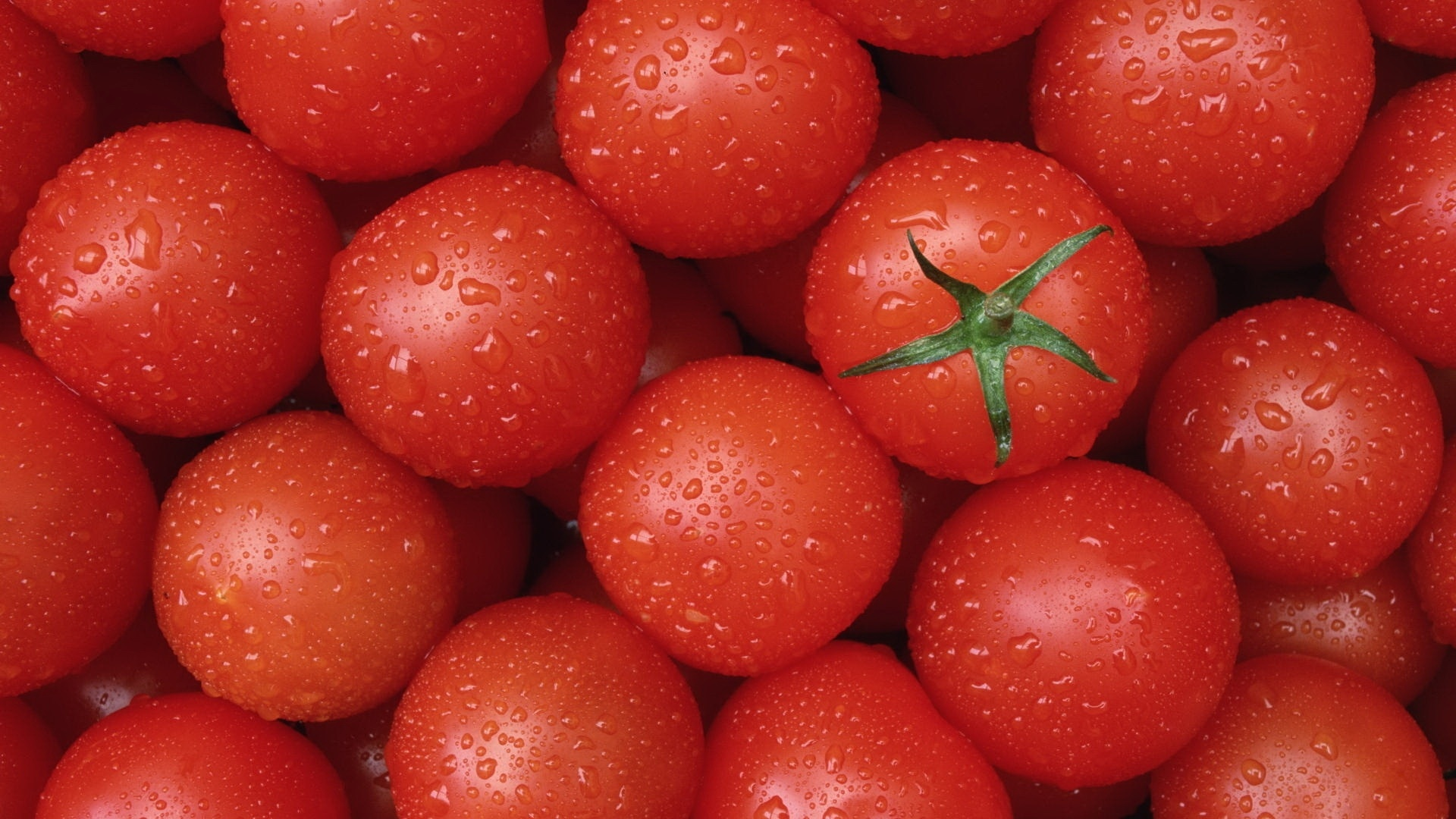 Tomatoes Wallpaper