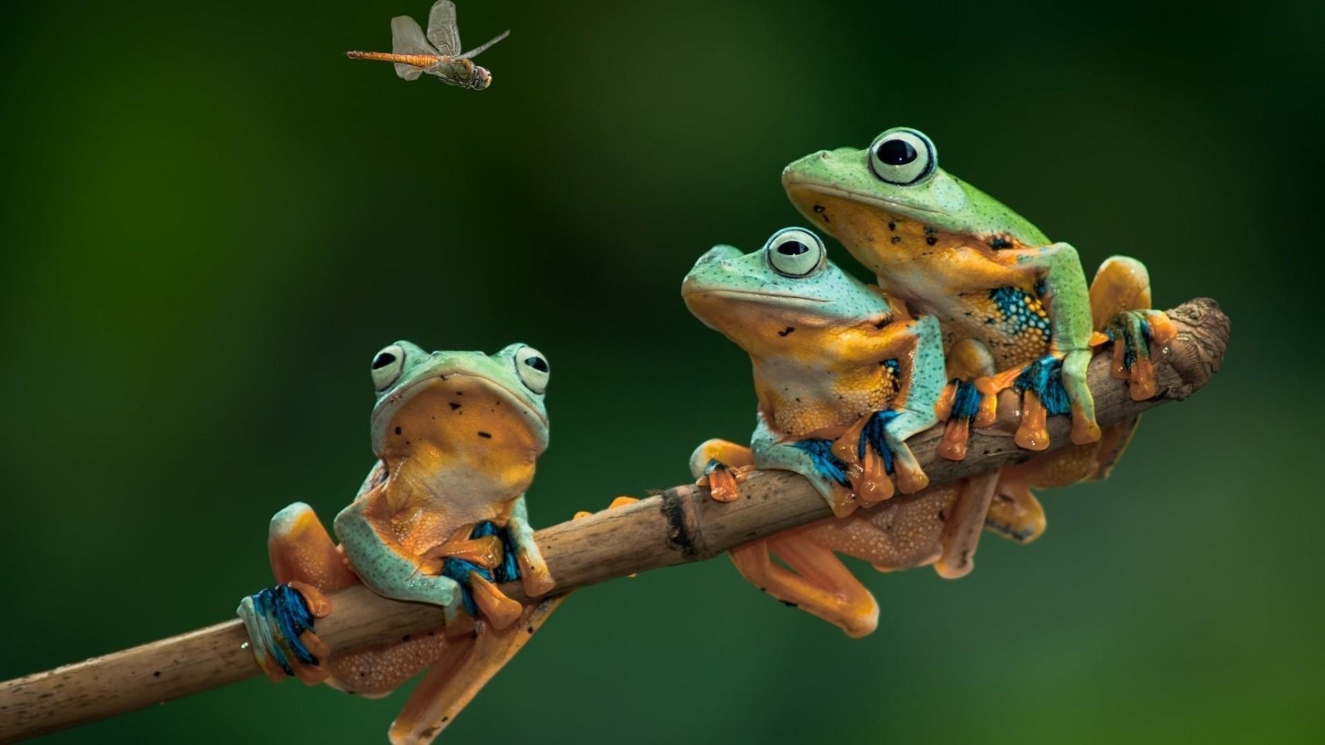 Frog Pic