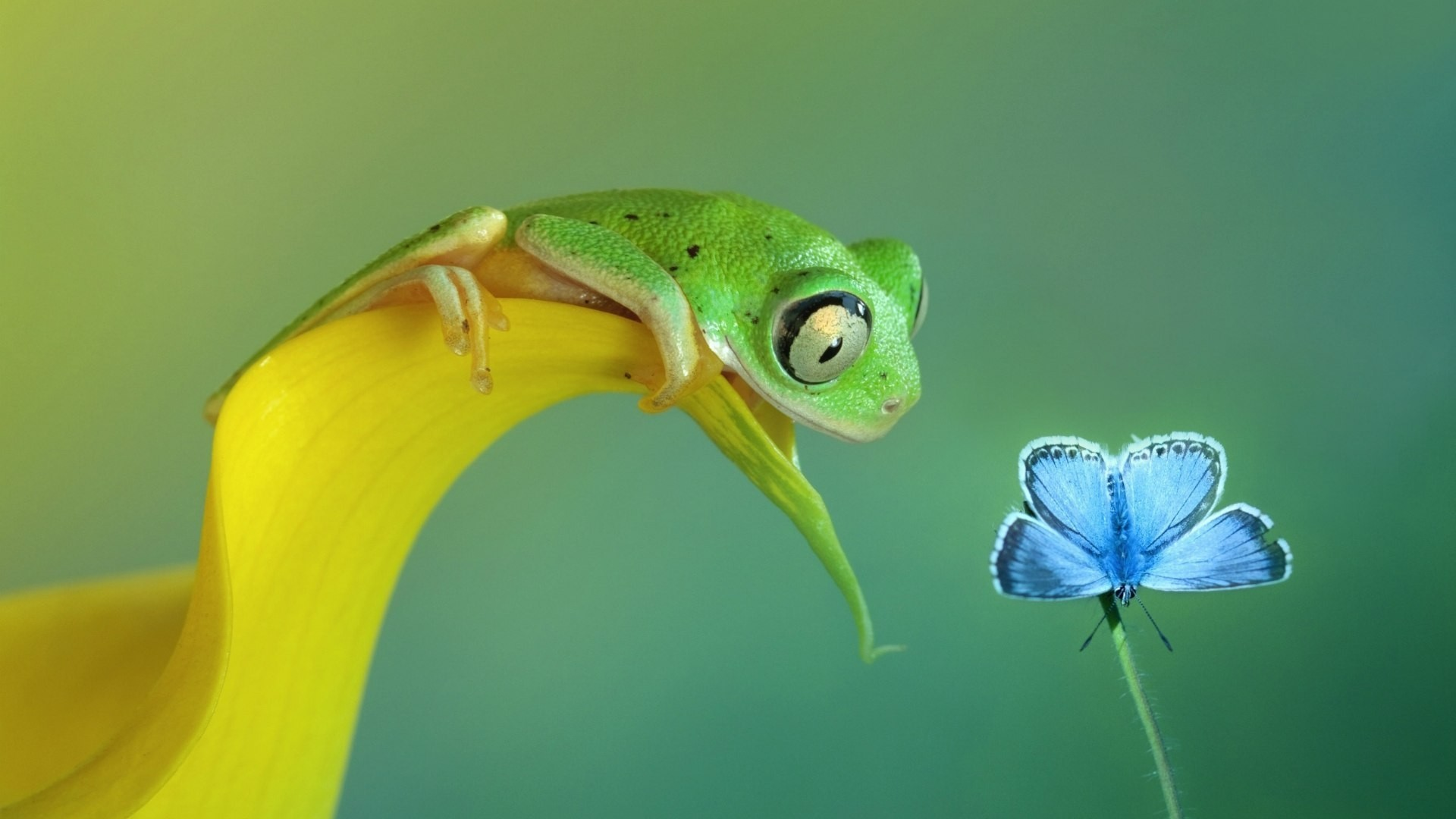Frog Wallpaper Picture hd
