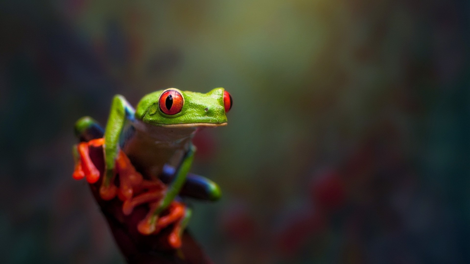 Frog High Quality