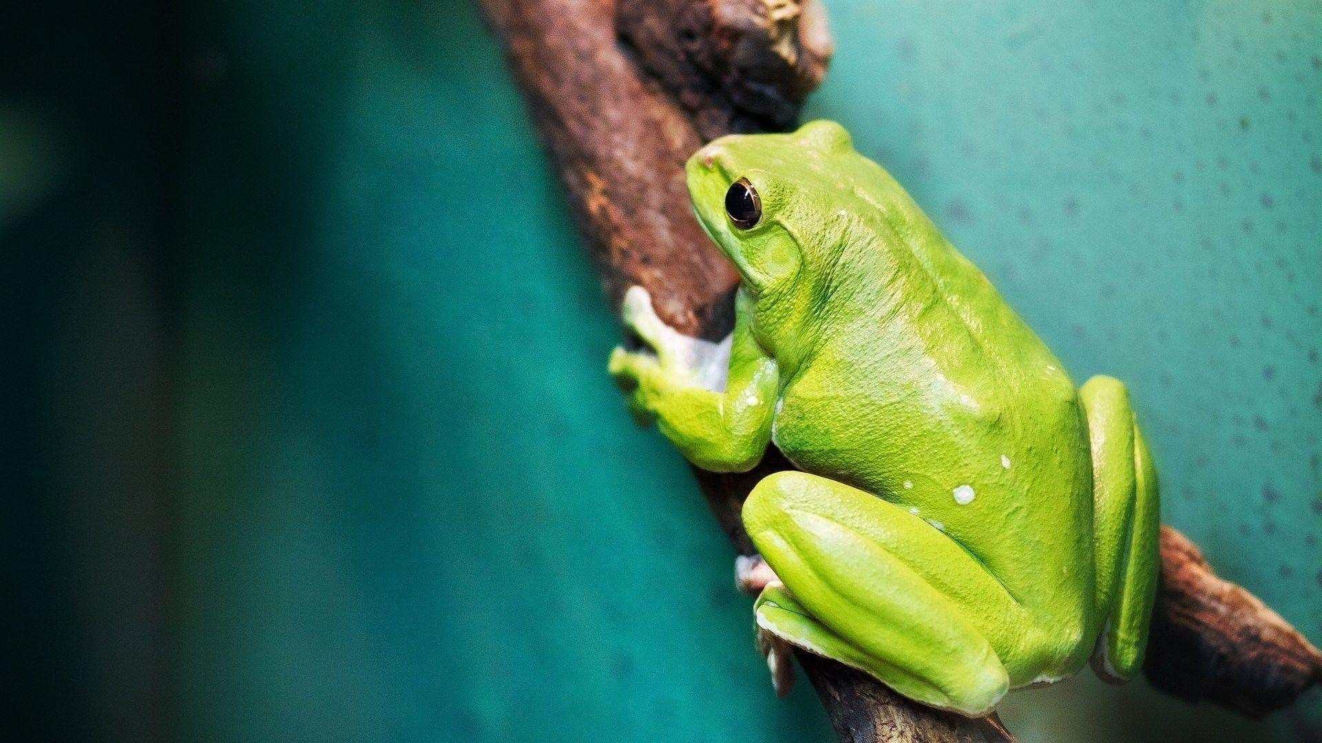 Frog Background Wallpaper