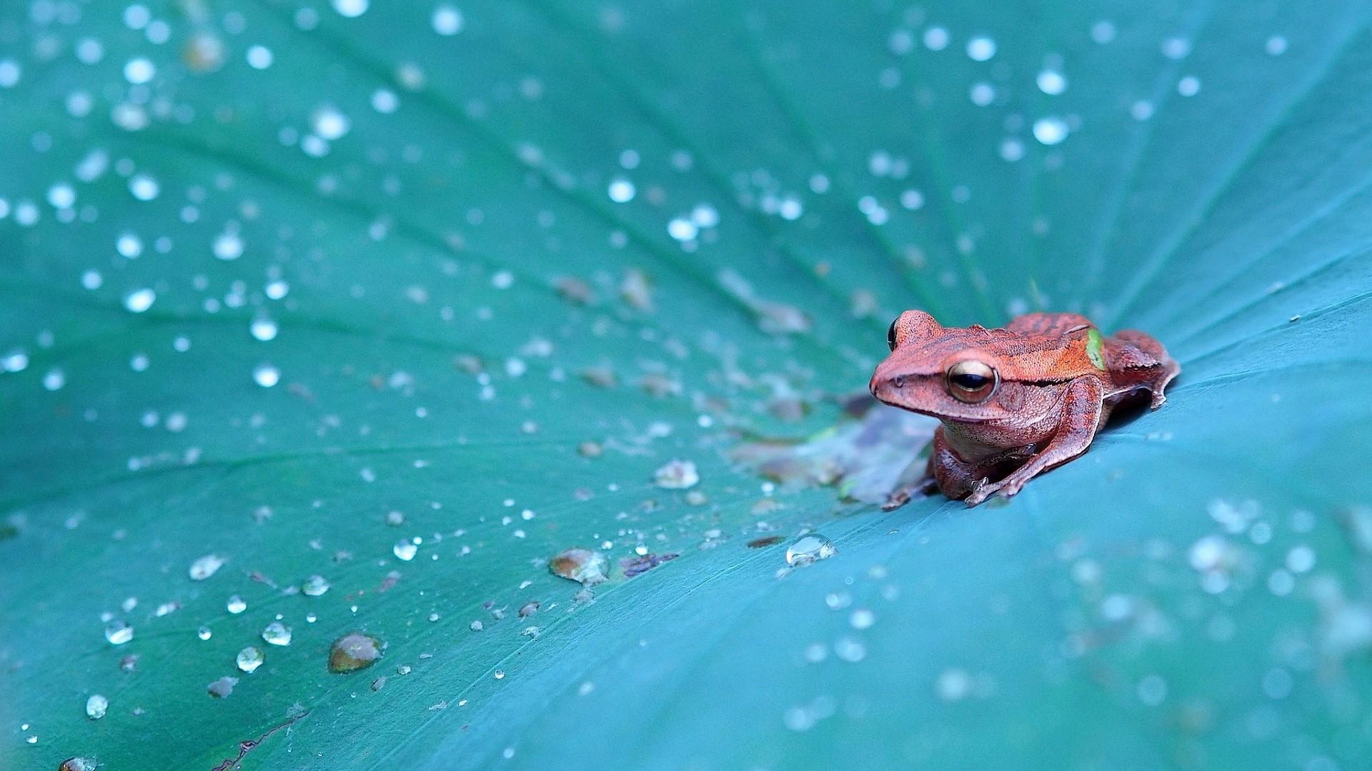 Frog HD Download