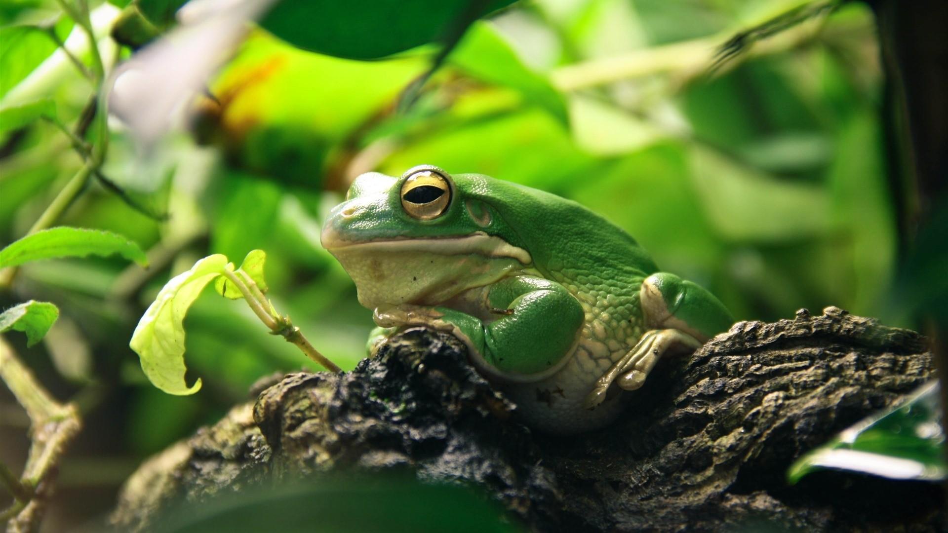 Frog wallpaper photo hd