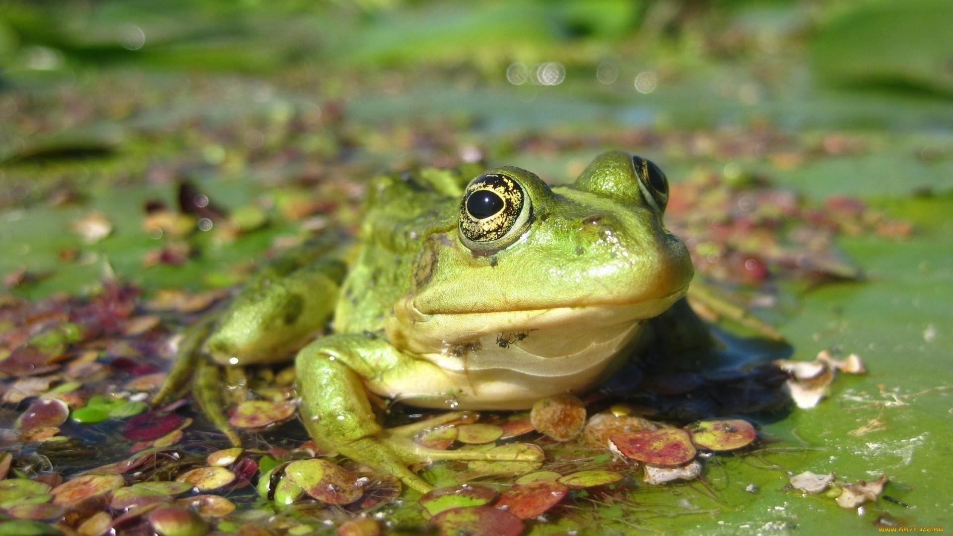 Frog Full HD Wallpaper
