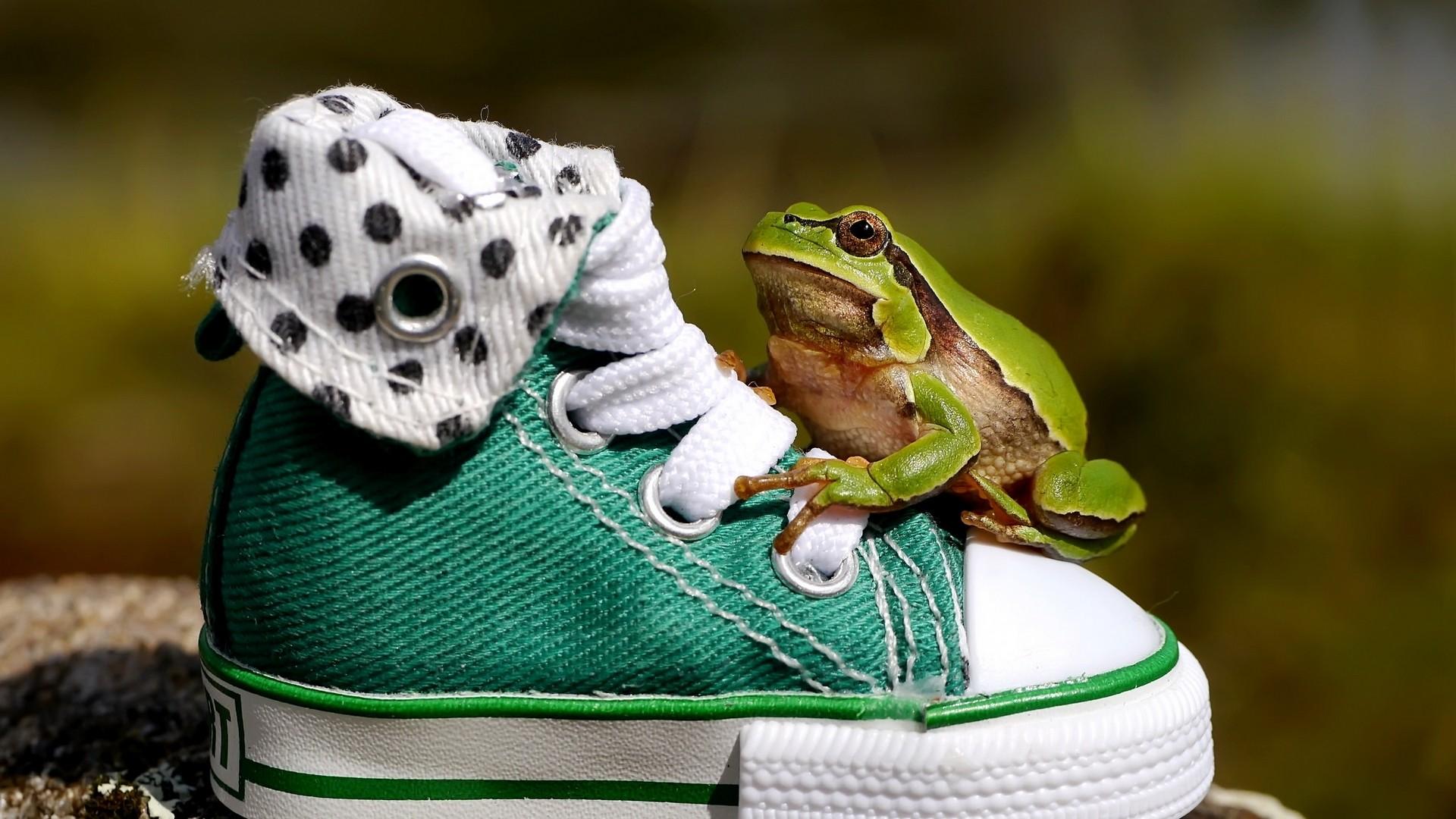 Frog computer wallpaper