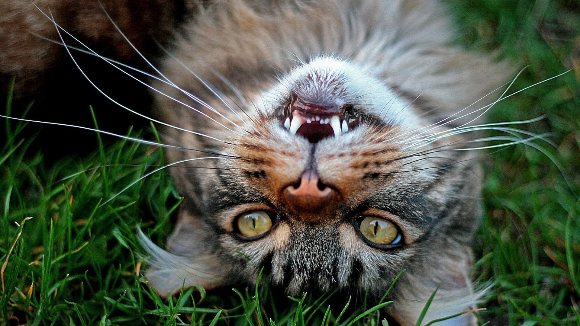 Funny Cat Free Wallpaper and Background