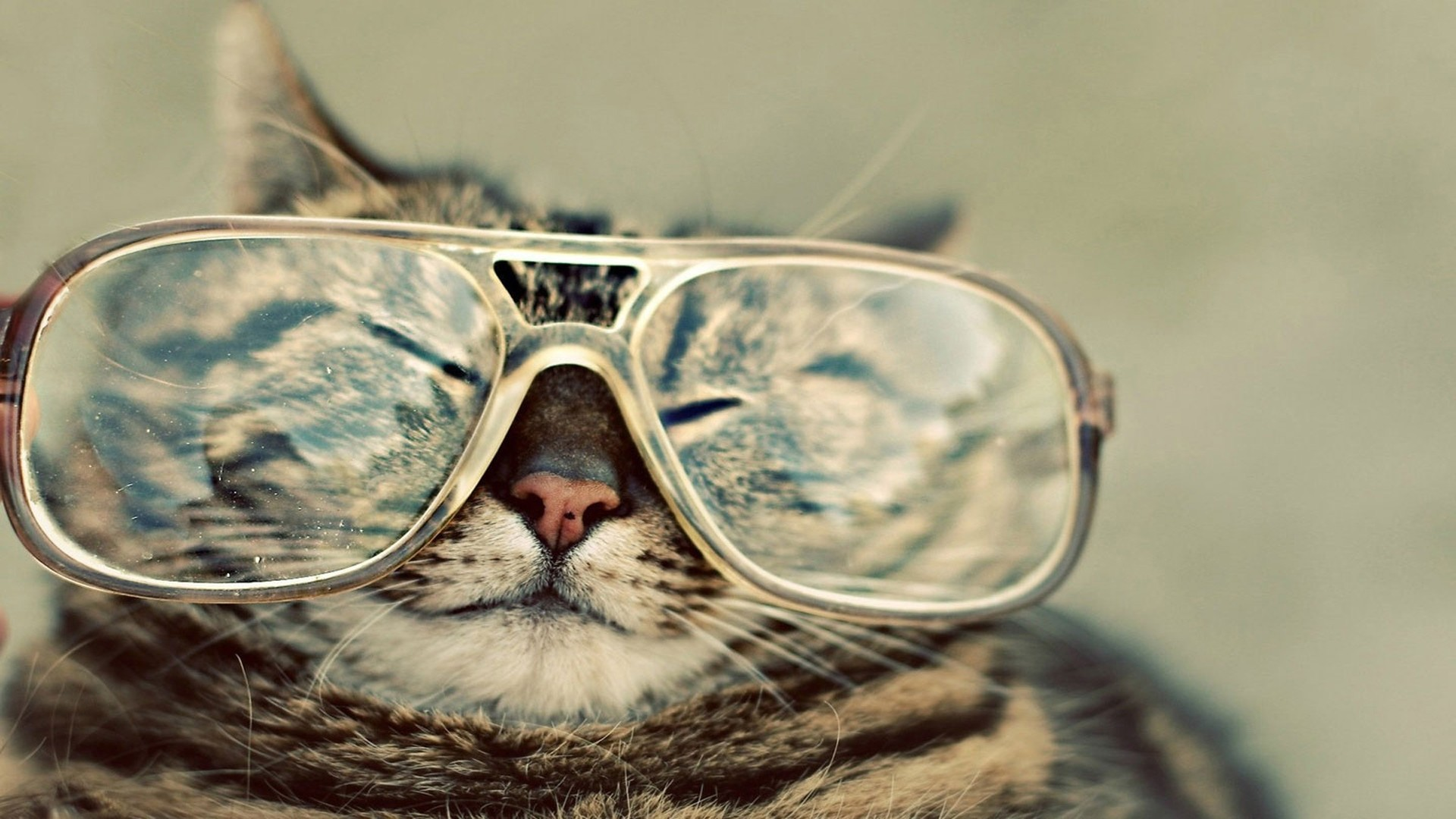 Funny Cat Desktop wallpaper