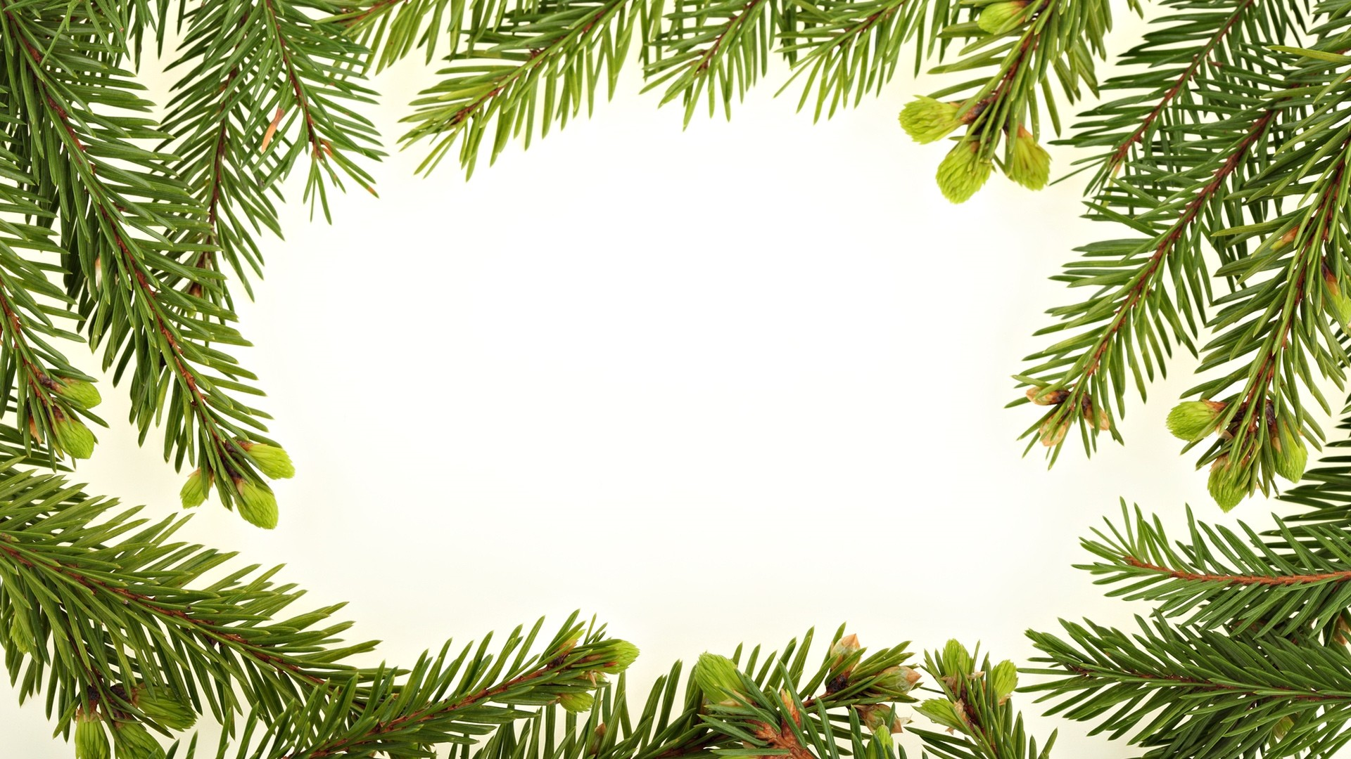 New Year Branch Frame Wallpaper for pc
