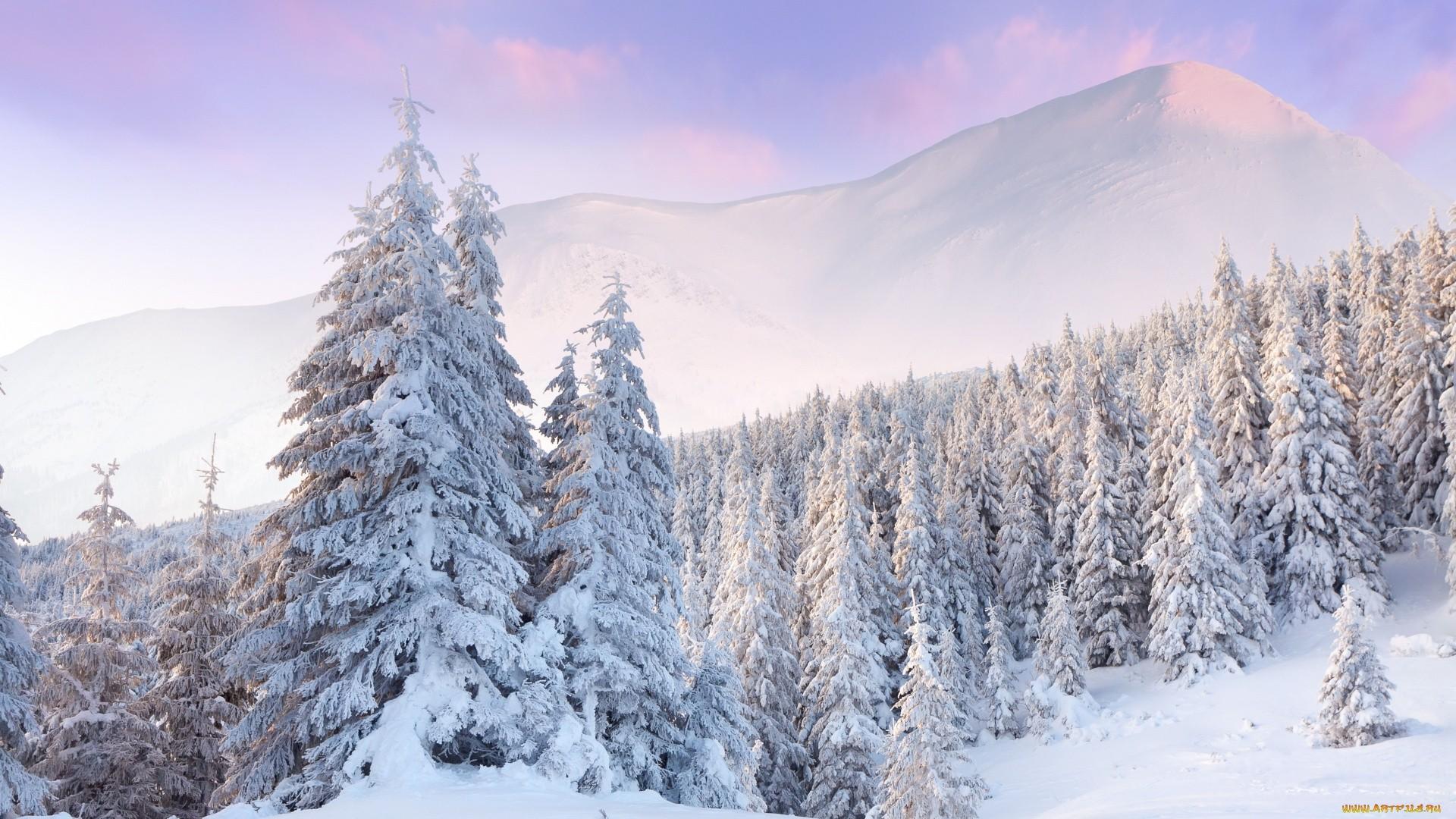 Snowy Free Wallpaper