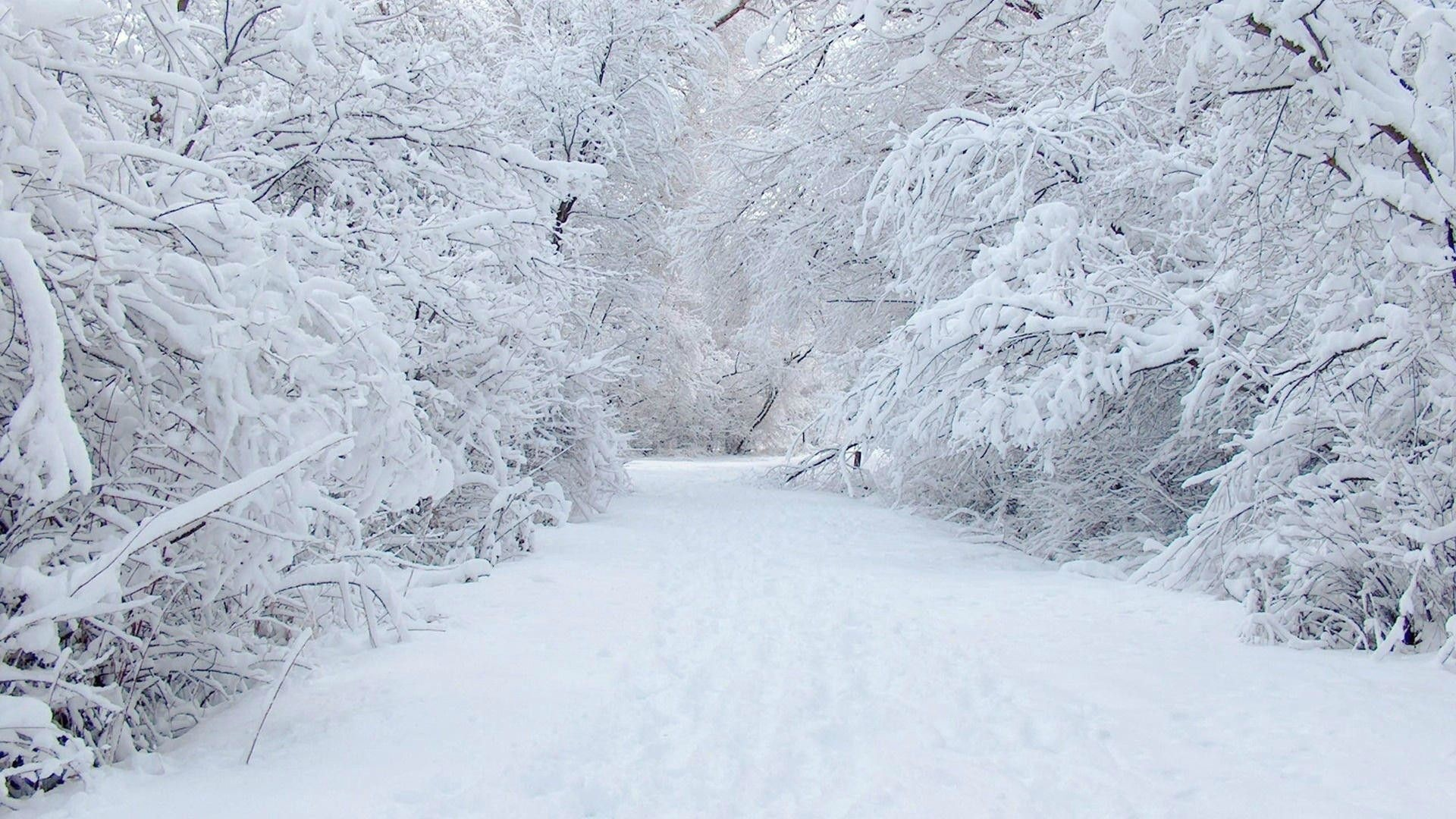 Snowy Download Wallpaper