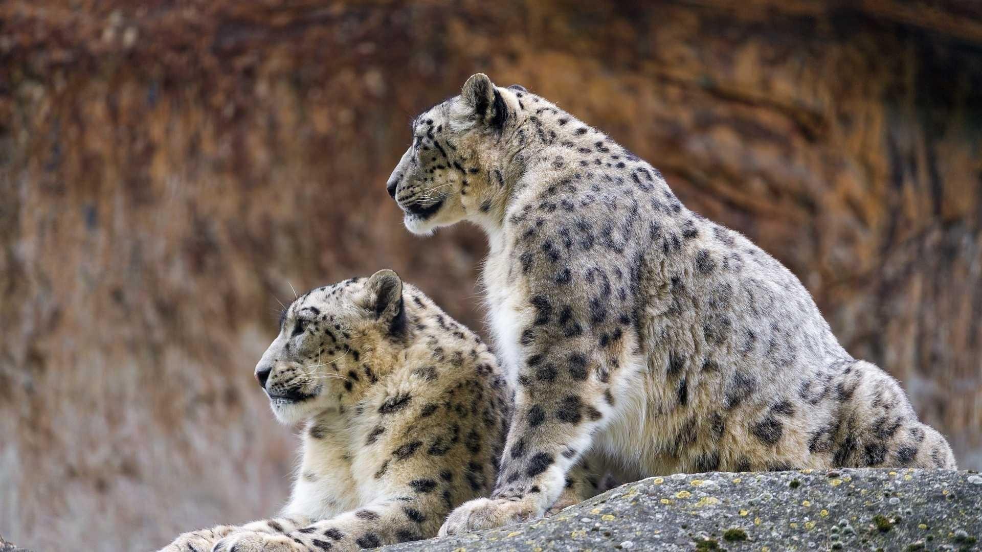 Snow Leopard Download Wallpaper