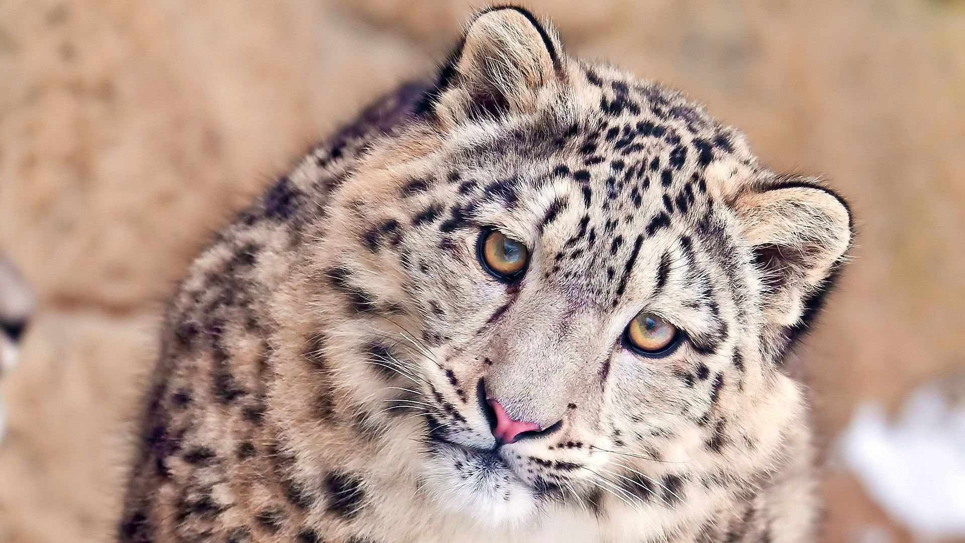 Snow Leopard PC Wallpaper HD
