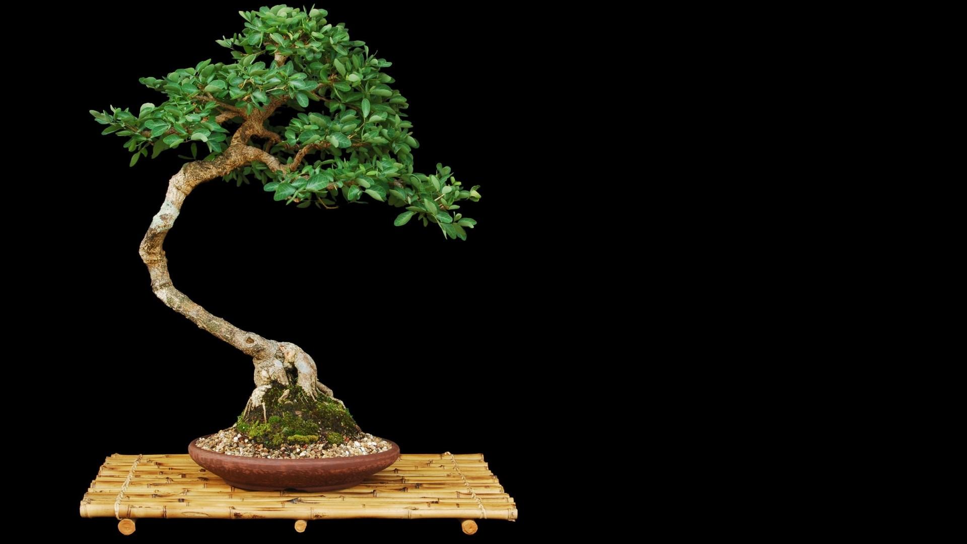 Tree Minimalist wallpaper photo hd