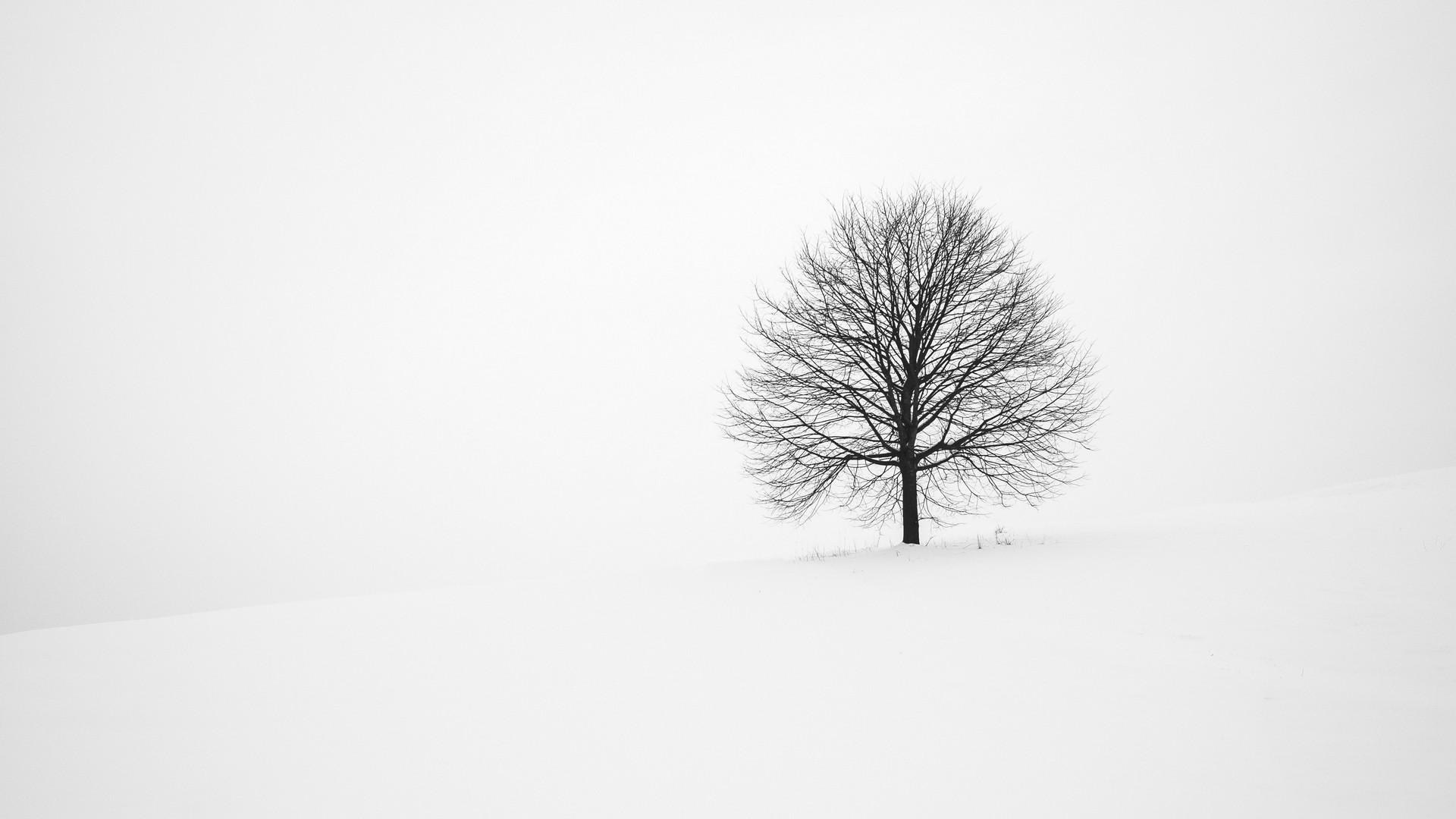 Tree Minimalist Background Wallpaper