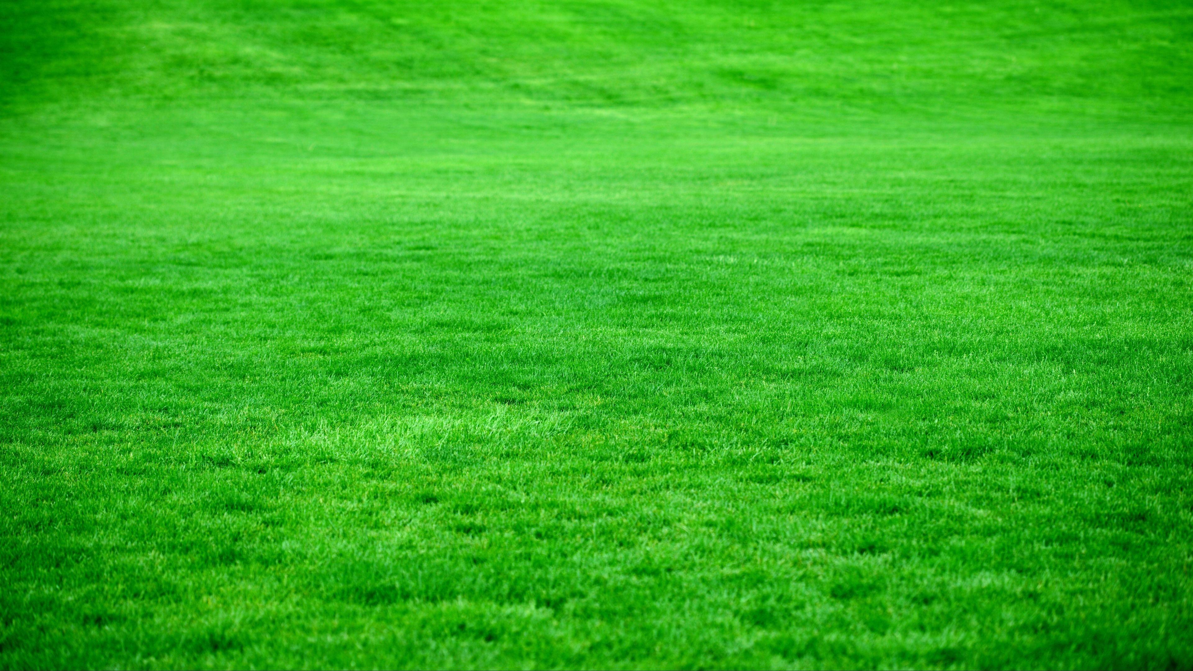 The Lawn HD Wallpaper