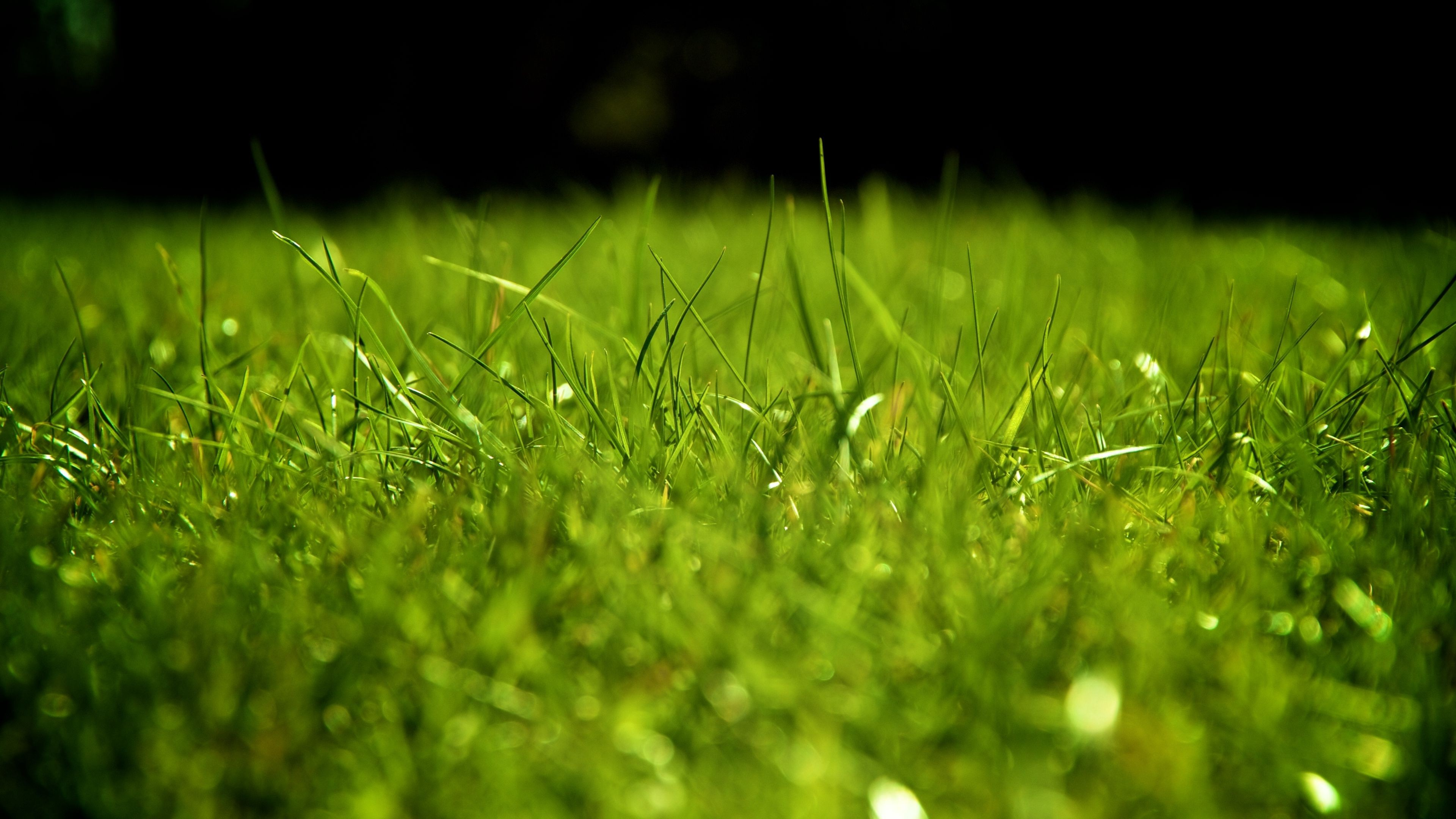 The Lawn High Quality