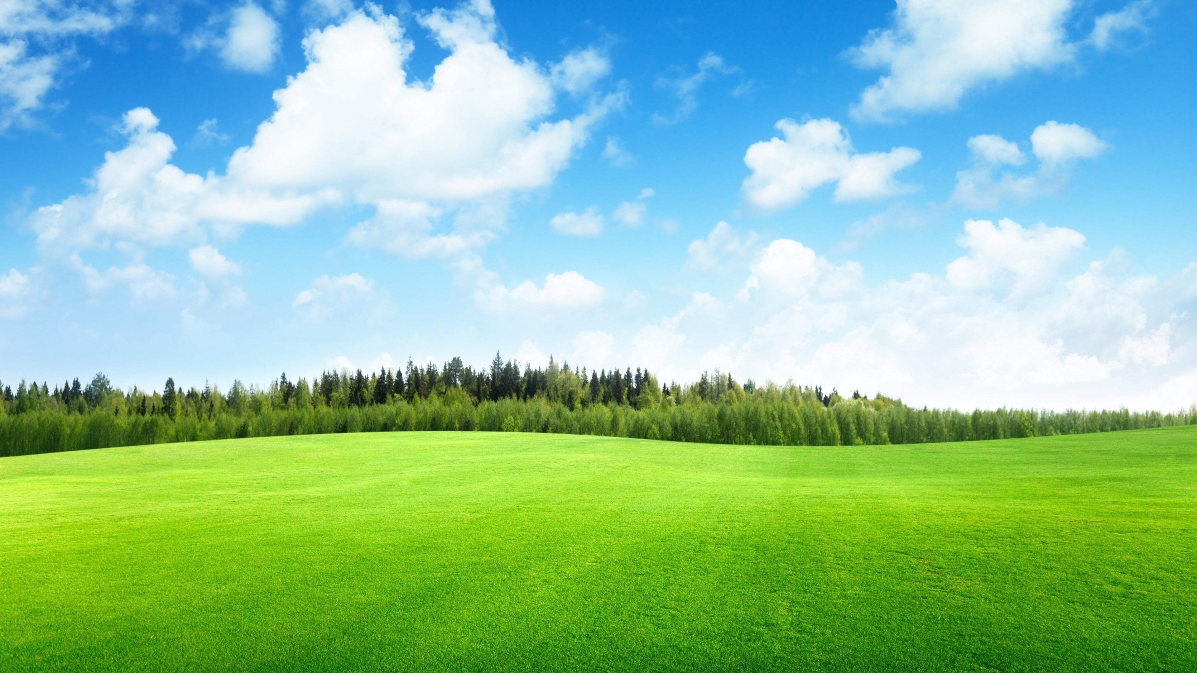 The Lawn hd desktop wallpaper