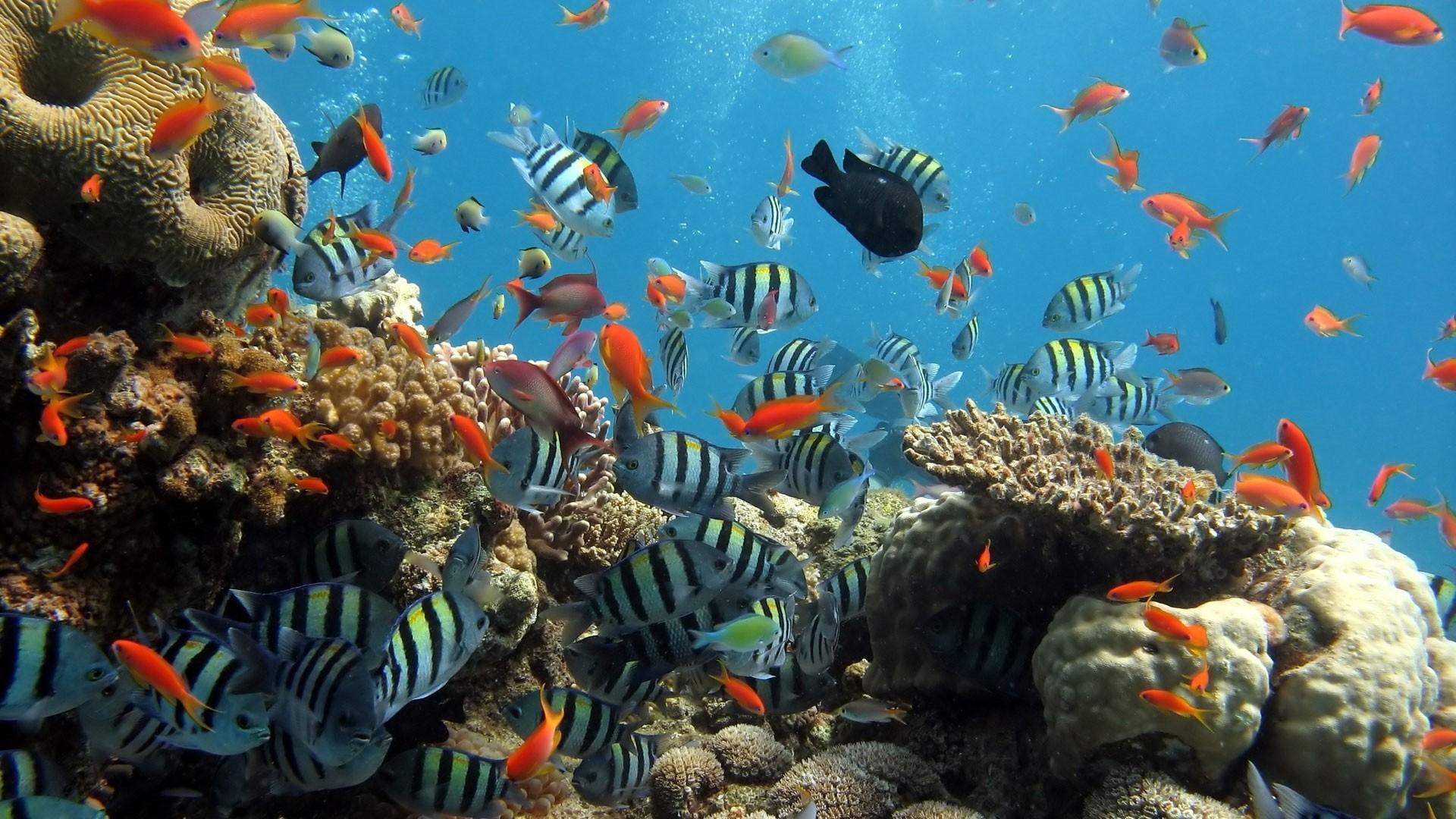 Coral Reef Full HD Wallpaper