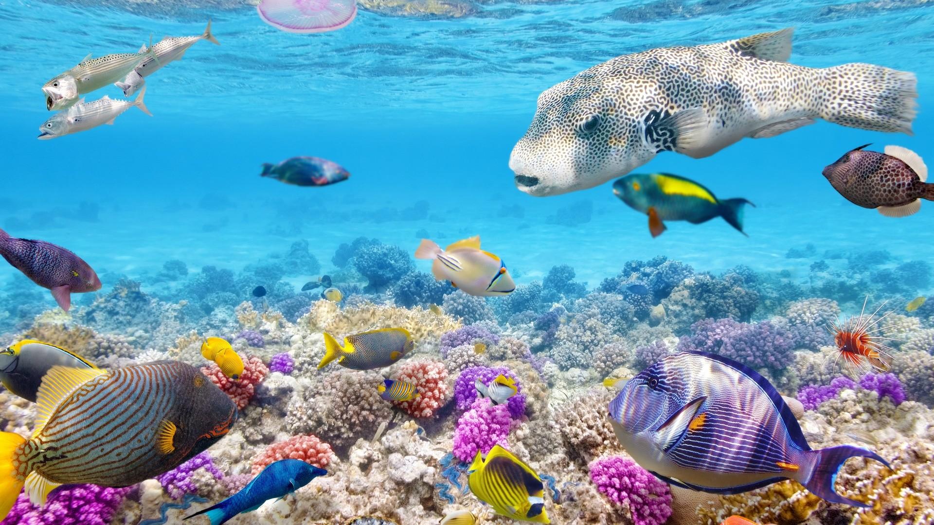 Coral Reef Free Wallpaper
