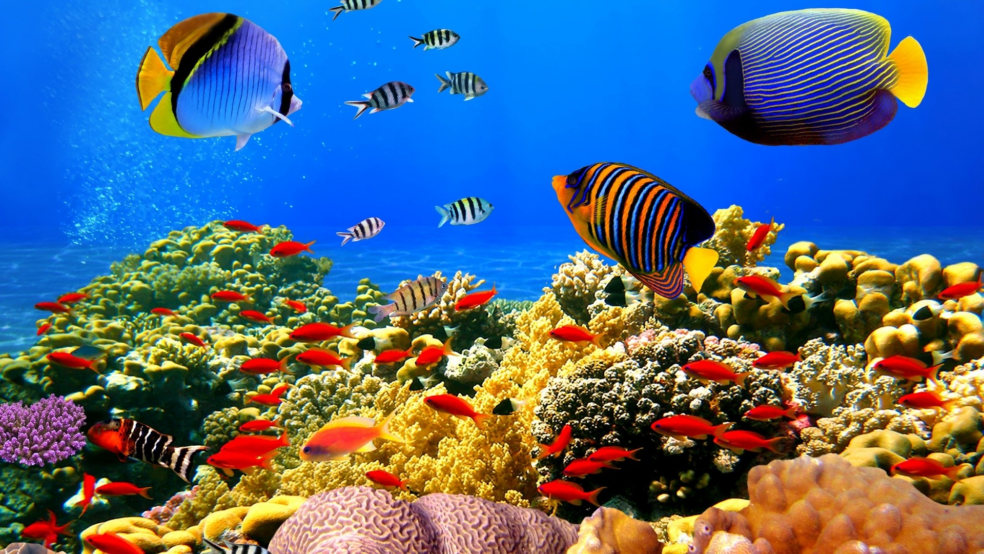 Coral Reef PC Wallpaper HD