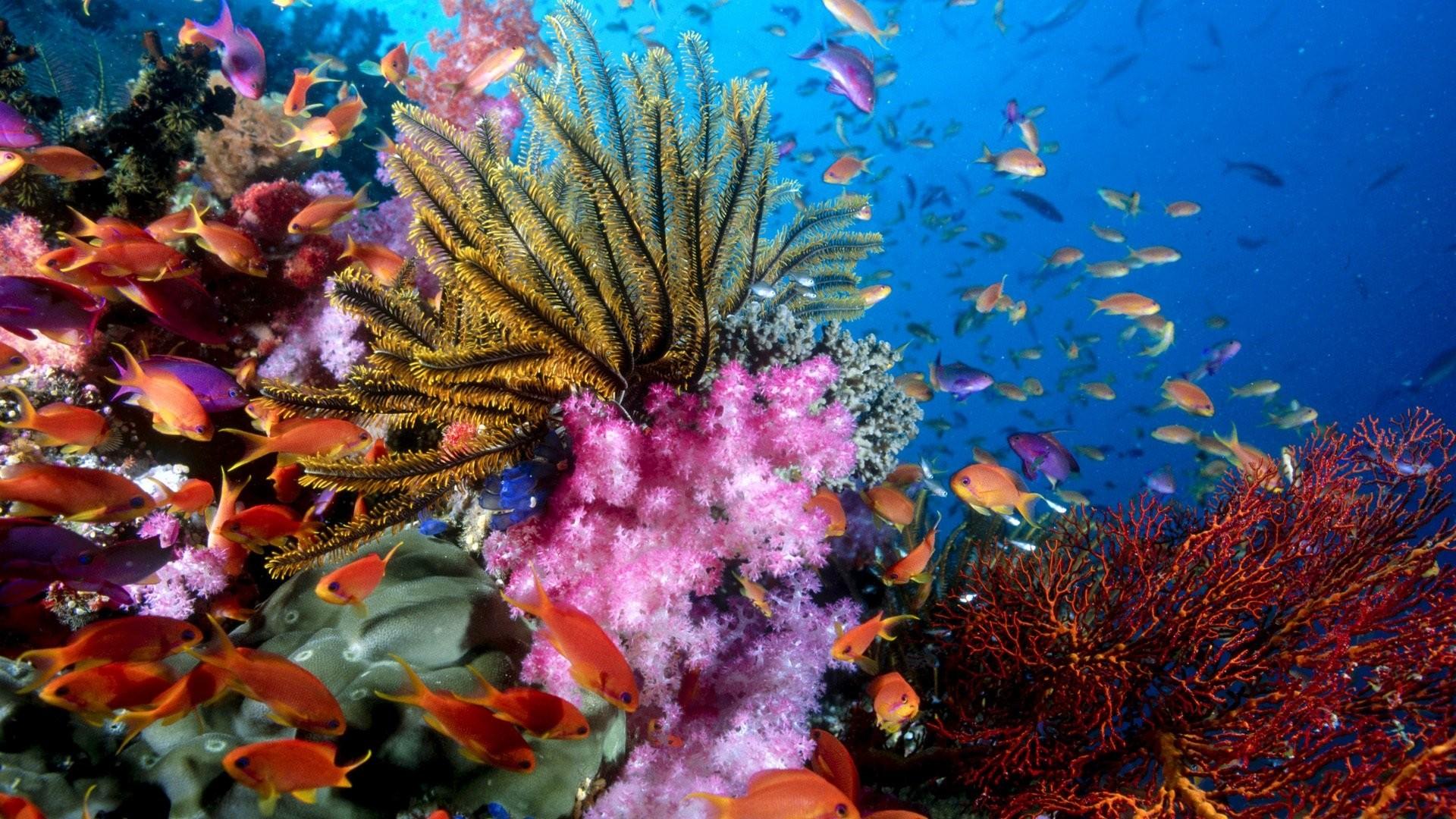 Coral Reef Wallpaper theme