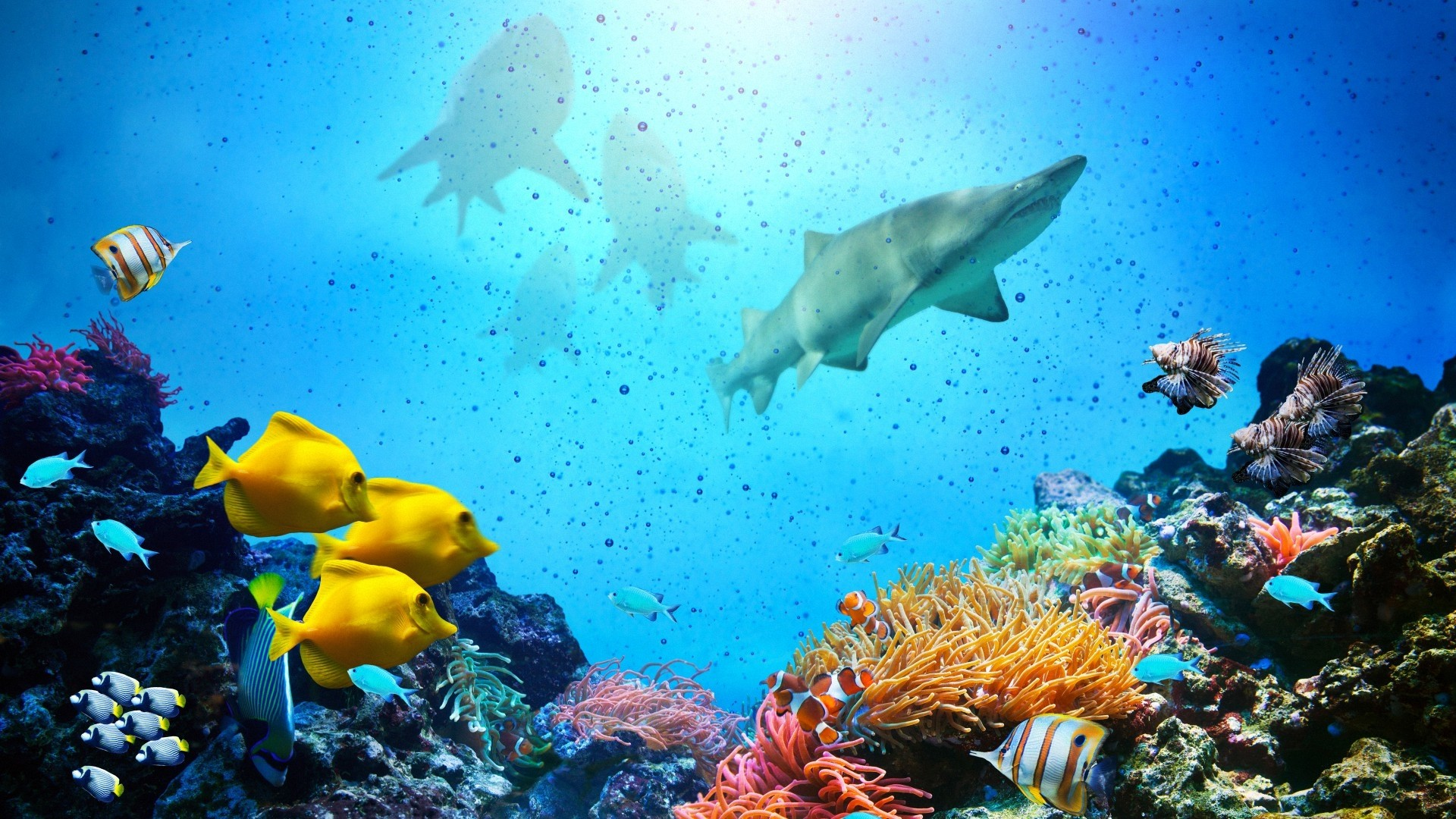 Coral Reef Download Wallpaper
