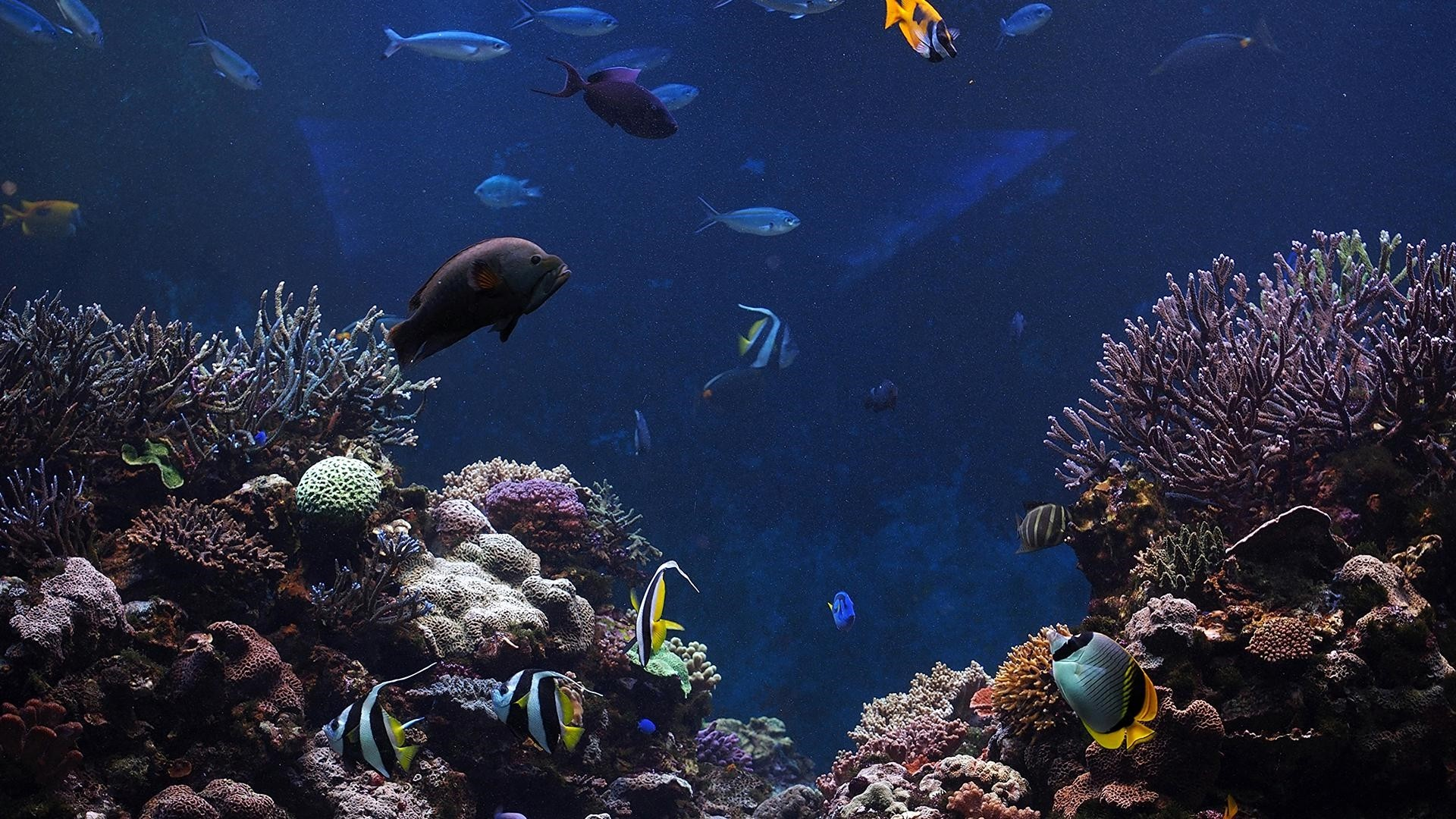 Coral Reef Background Wallpaper