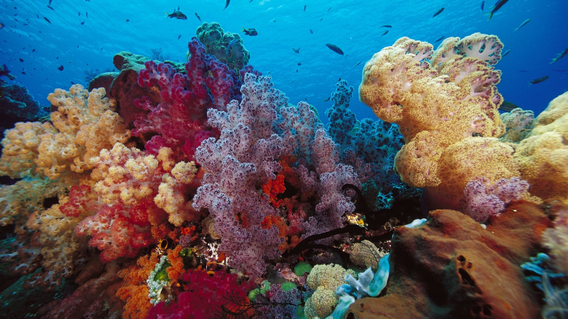 Coral Reef PC Wallpaper